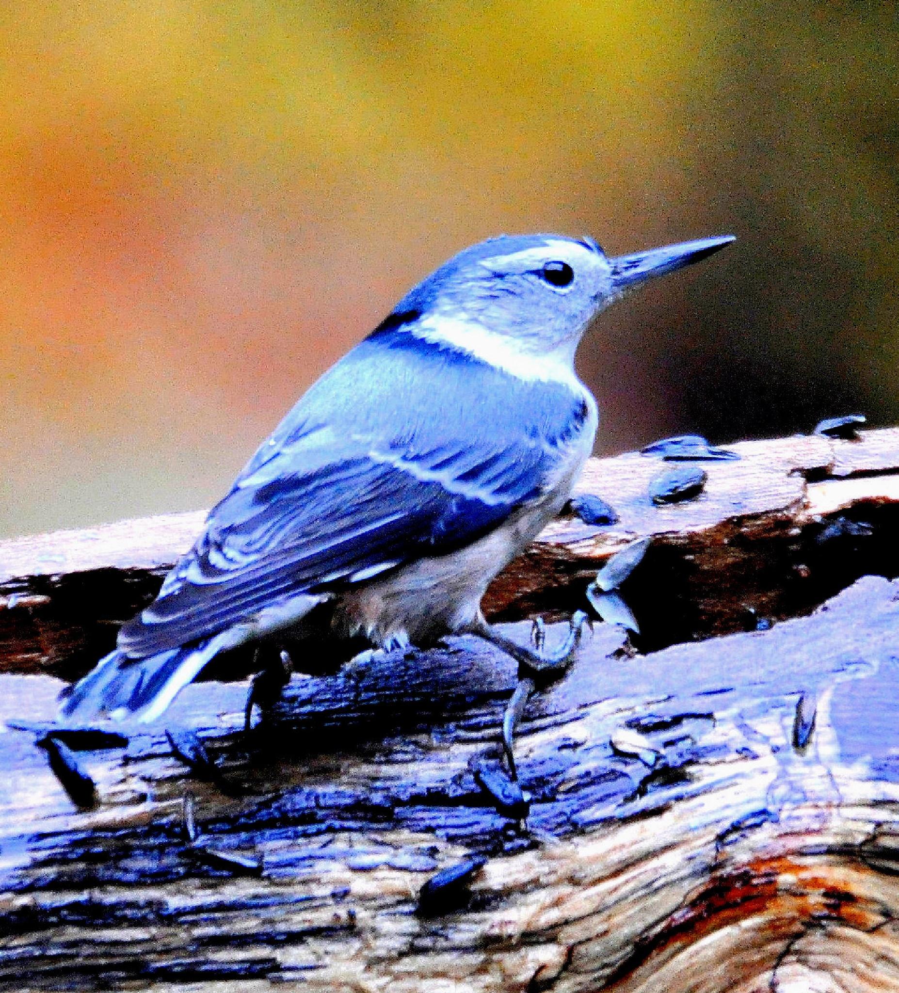 Nutty Bird by Joeski