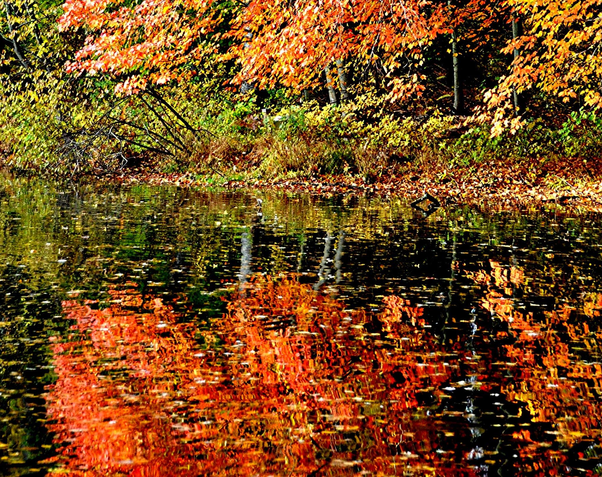 Autumn Color by Joeski