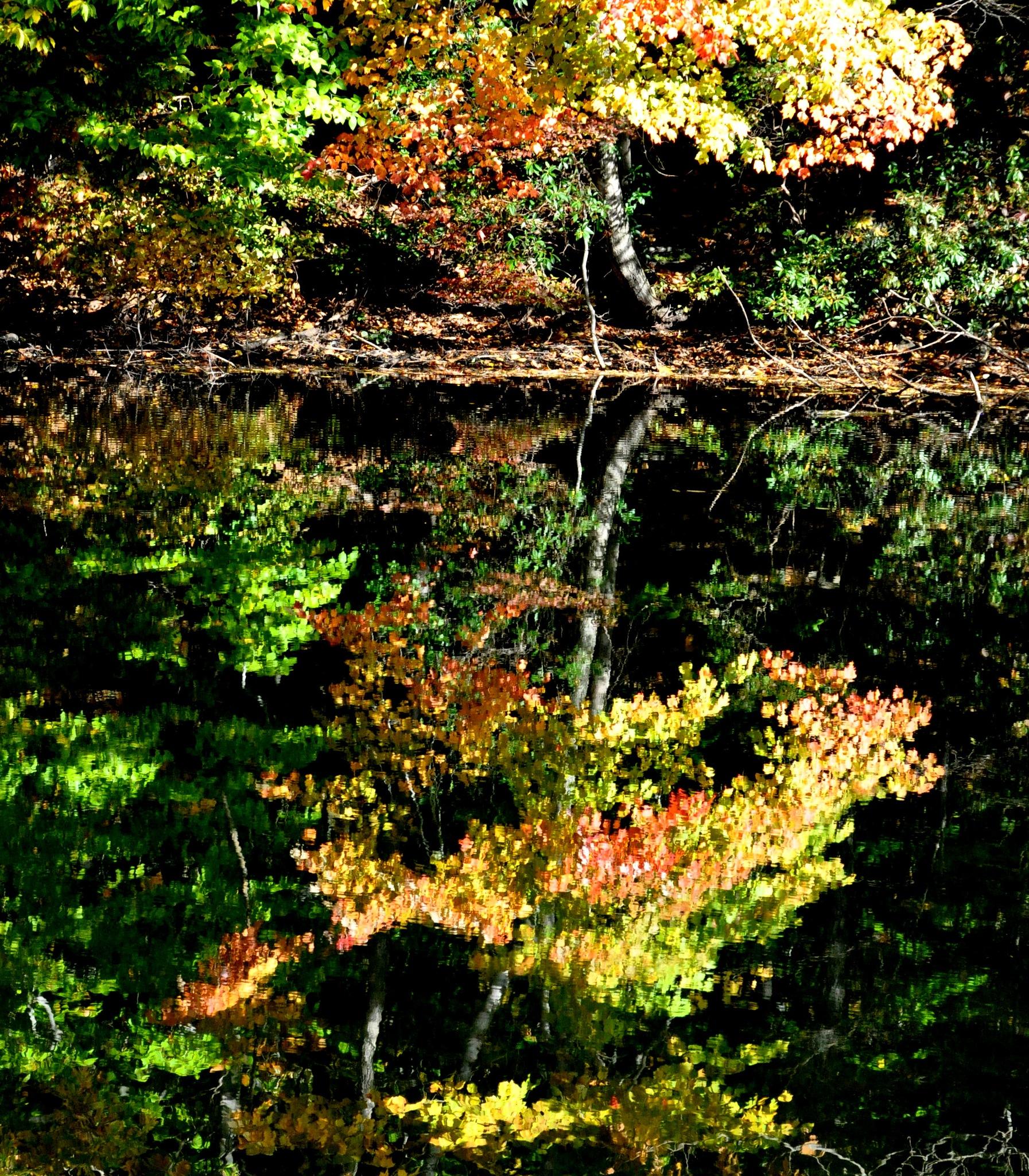 Reflection by Joeski