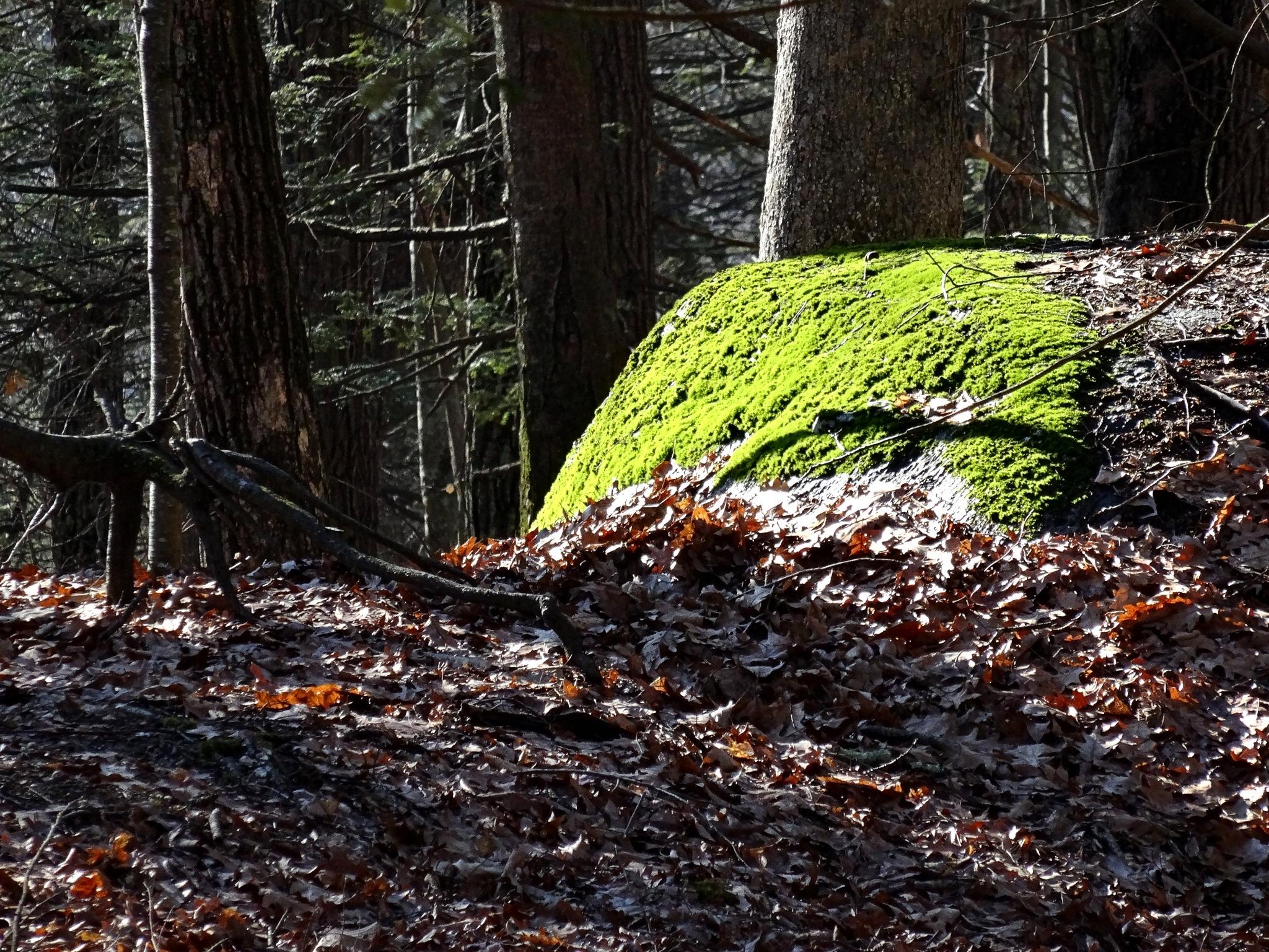 Winter Green by Joeski