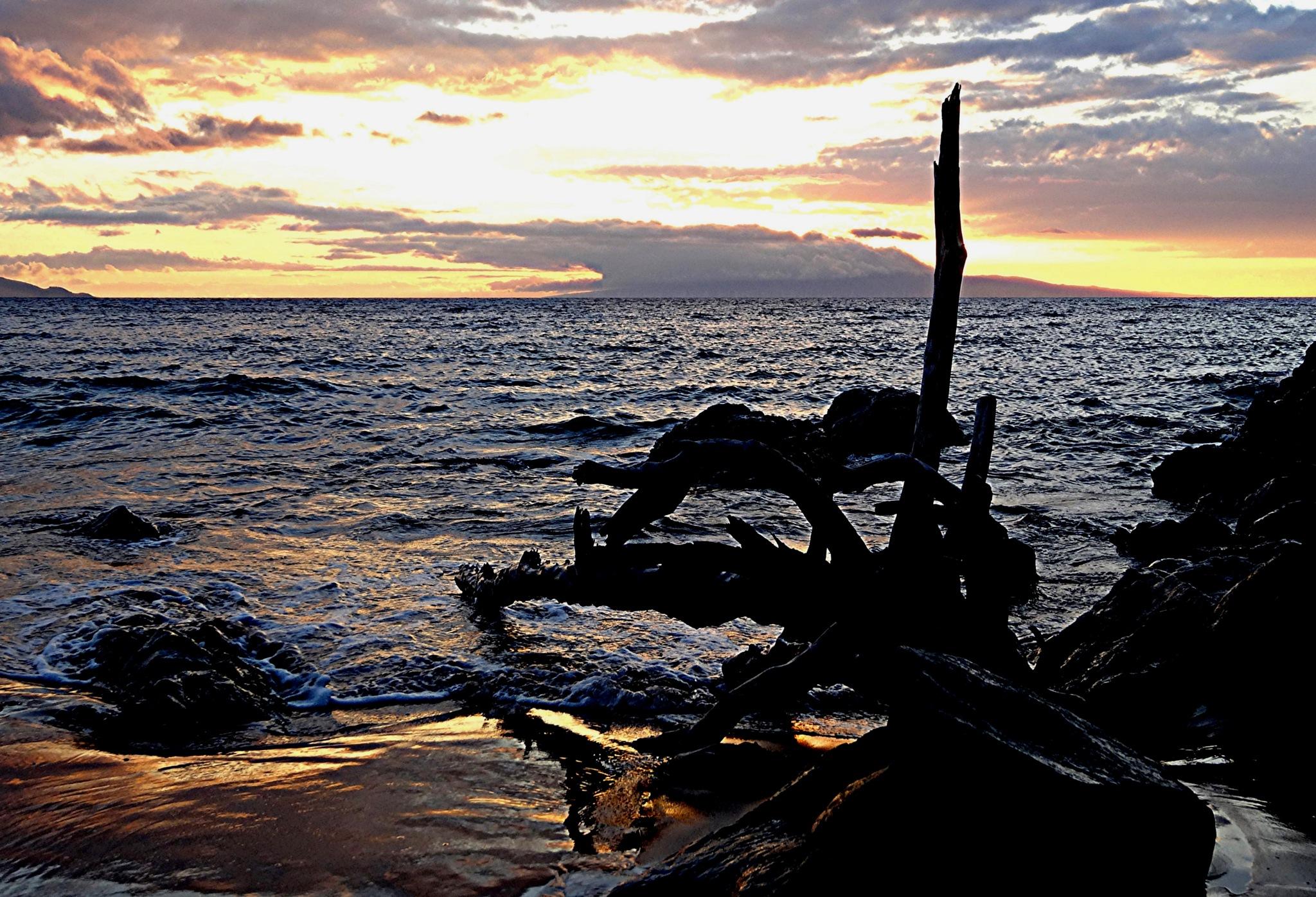 Driftwood Sunset by Joeski