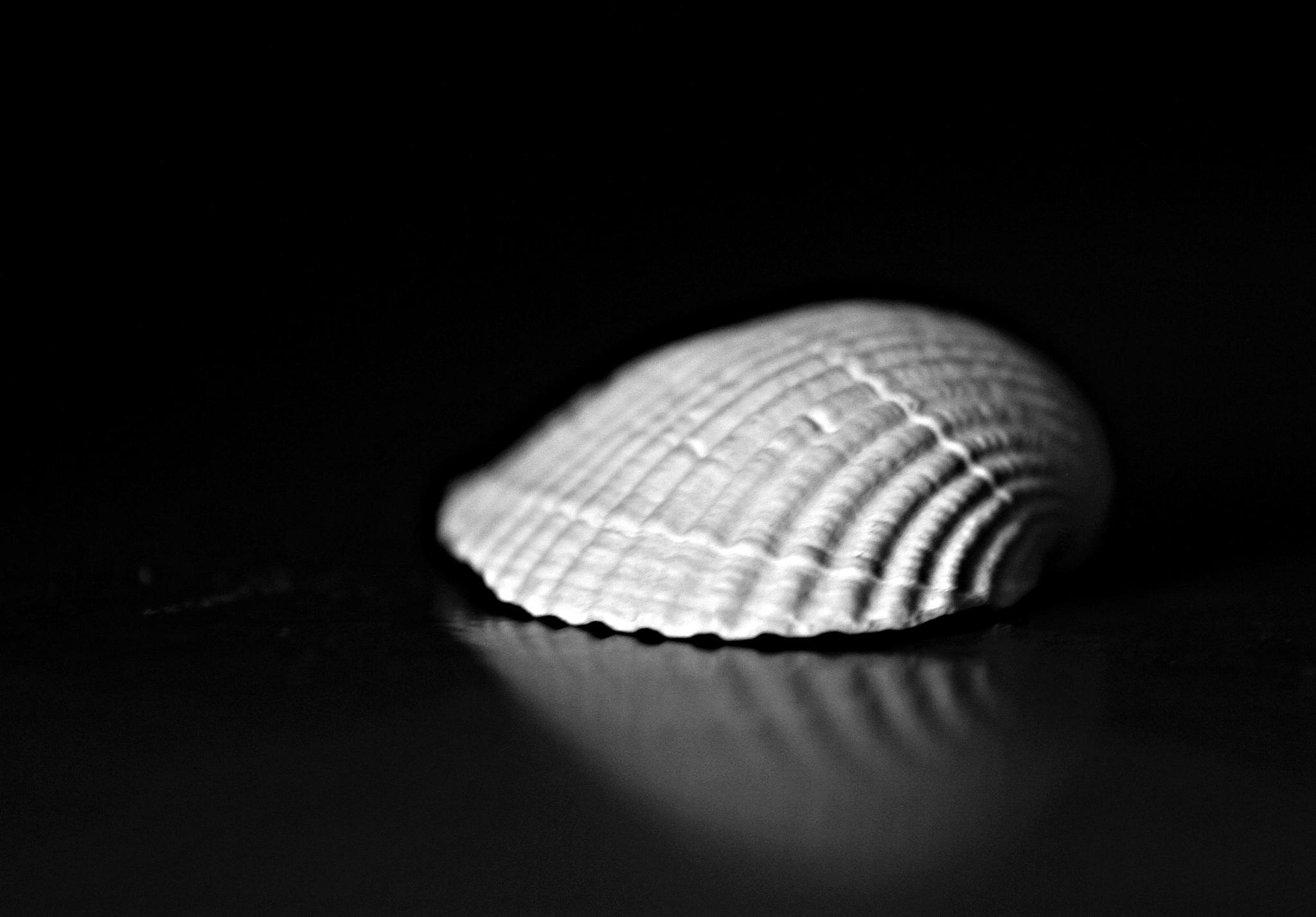 Shape by alin.dijmarescu