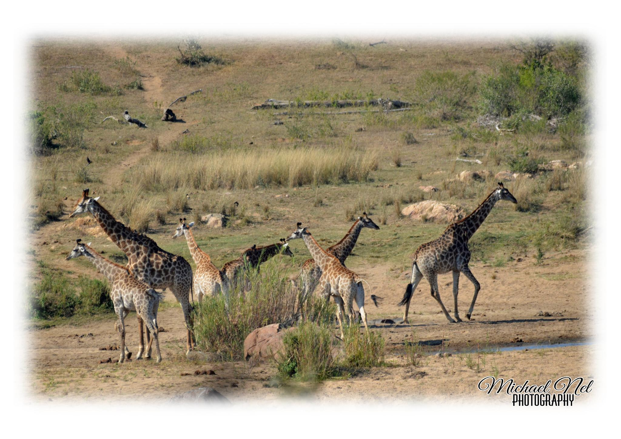Kruger National Park (16/06/2015) by michael.nel.526
