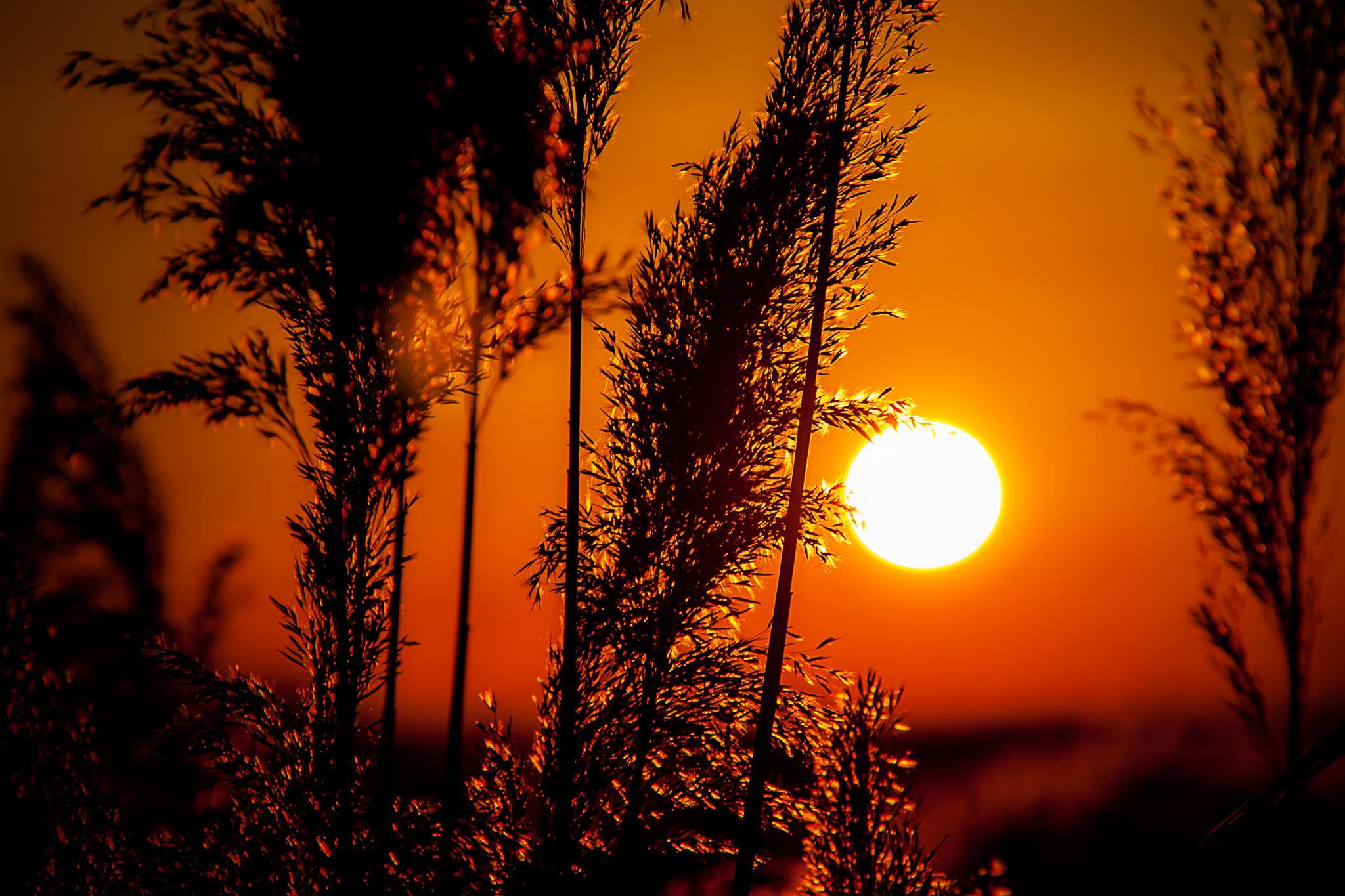 Sunset by fulvio.abbattista