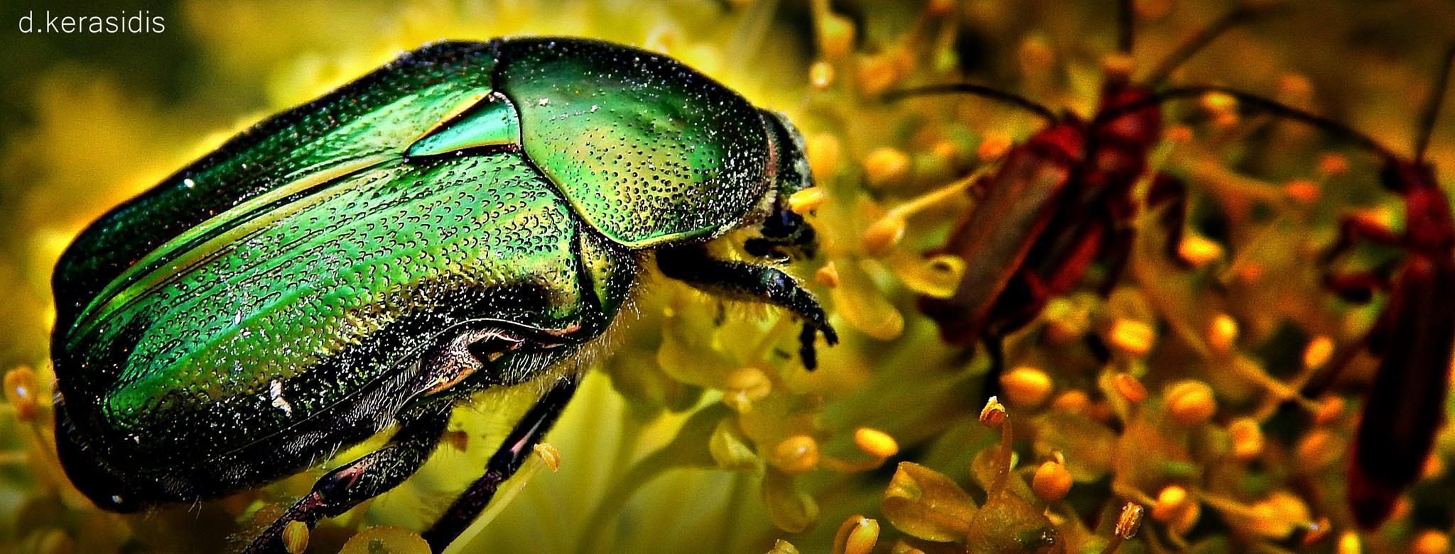 beetle  by kerasidis.dimitris