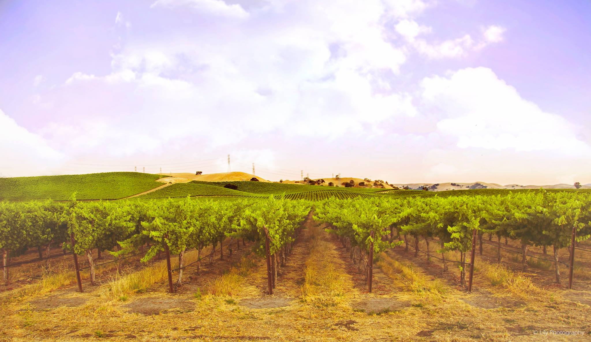 Thy Lovely Vineyards by Lili Muntean
