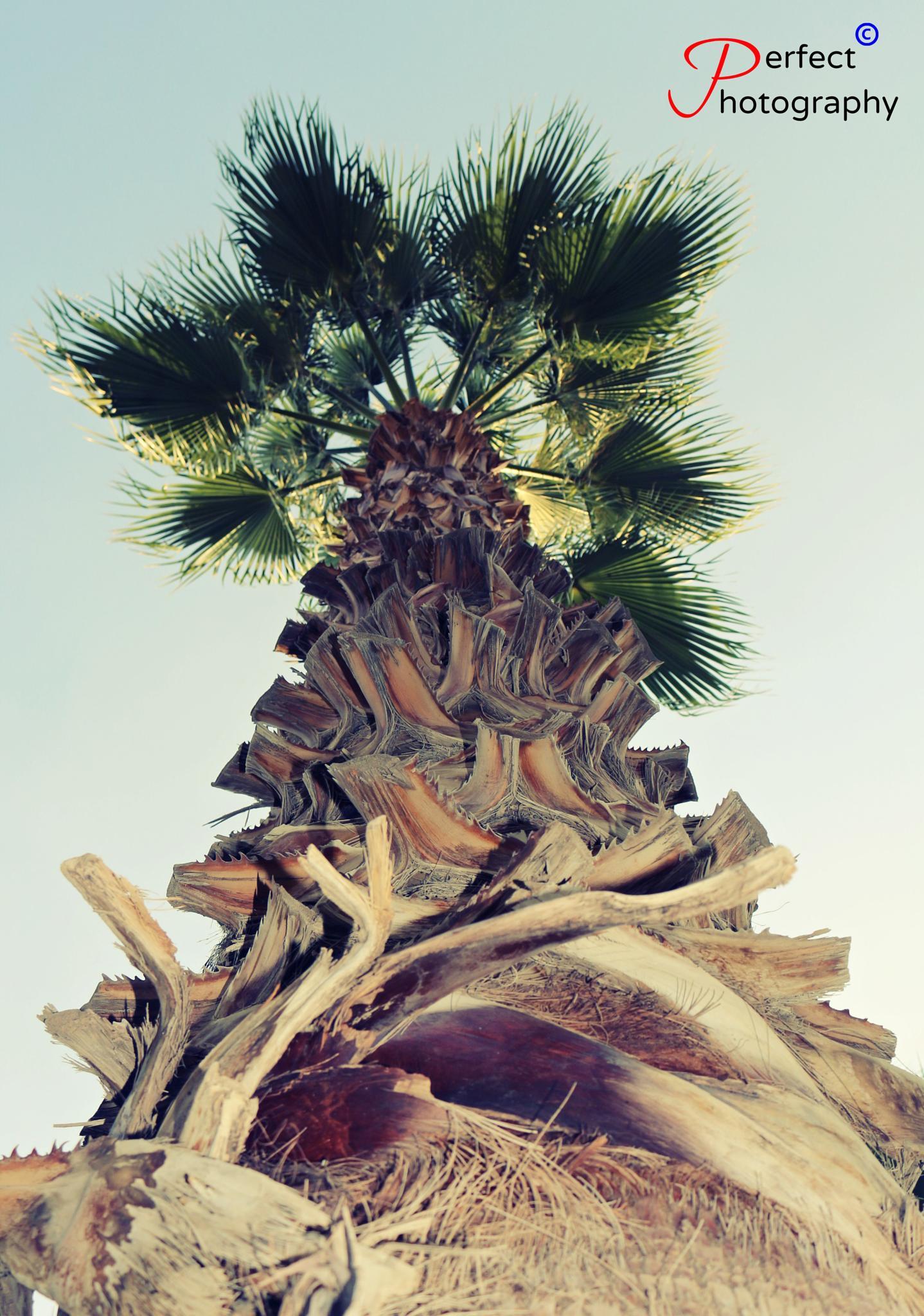 tree by mohamed yehia