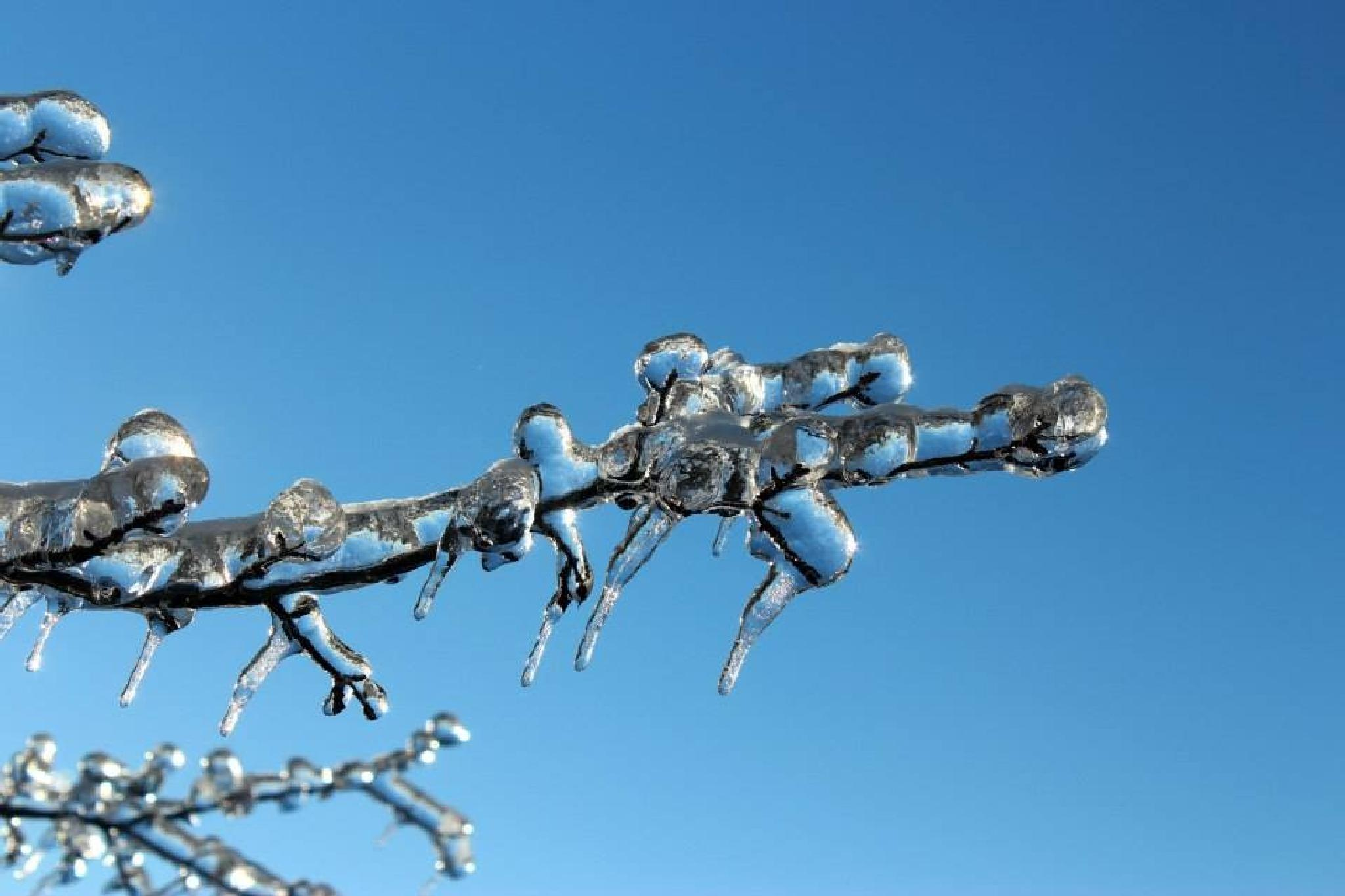 Photo in Nature #icestorm #branches #tree