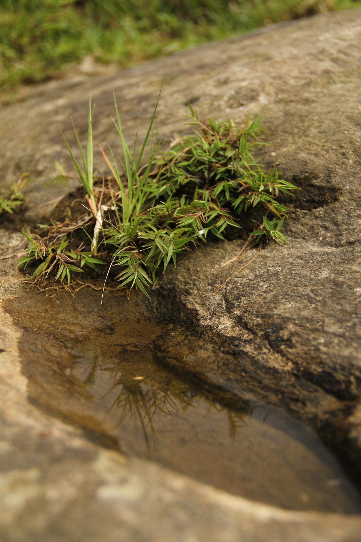 tiny eco system. by Sujeet Maharjan