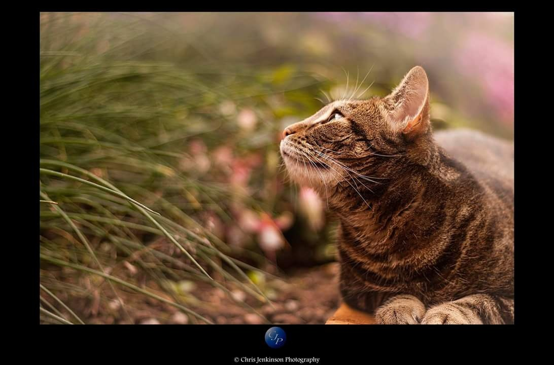 Who's There?  by Chris Jenkinson Photography