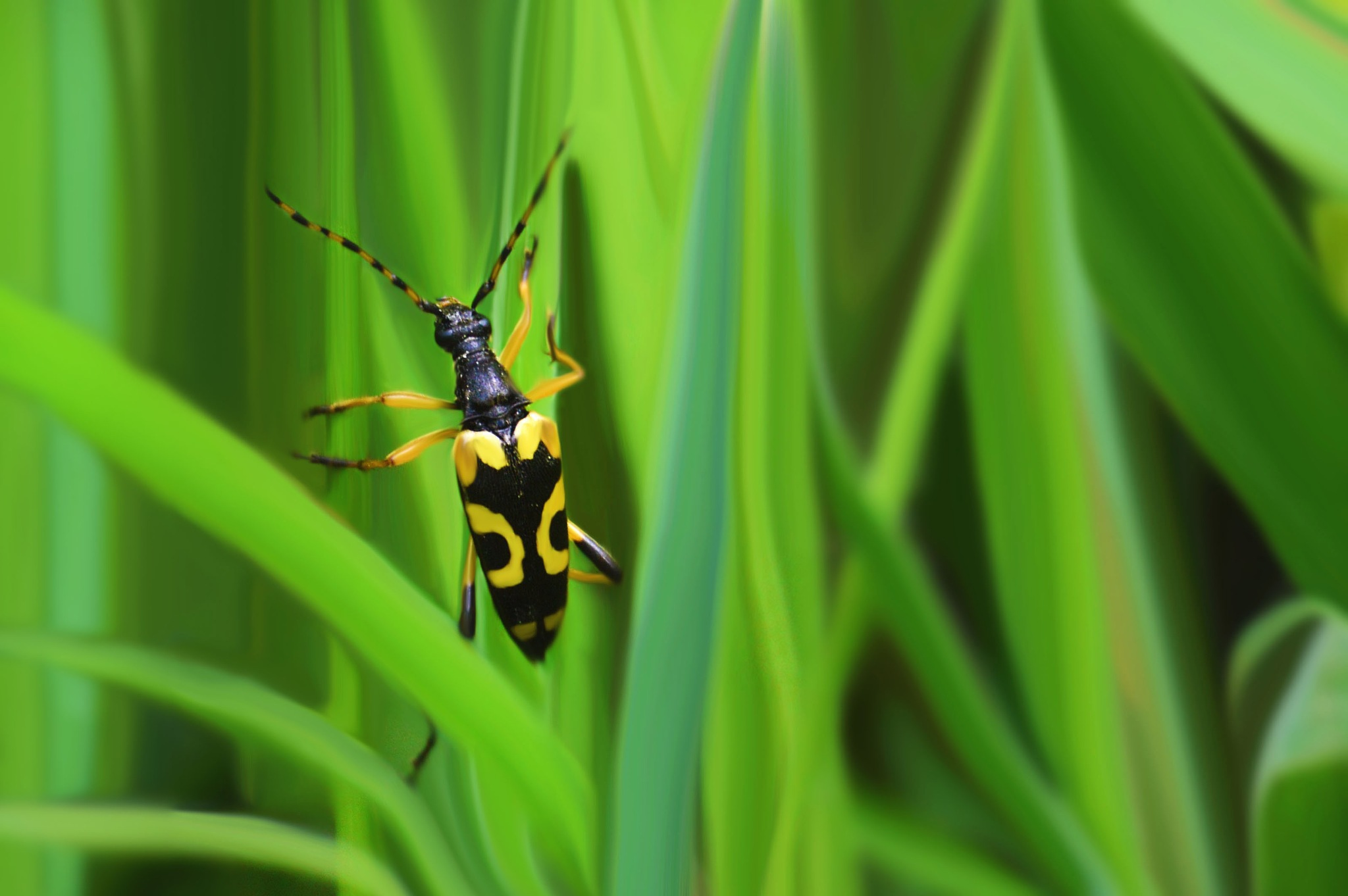 Insect Jaune by Ti_Gris_Gris