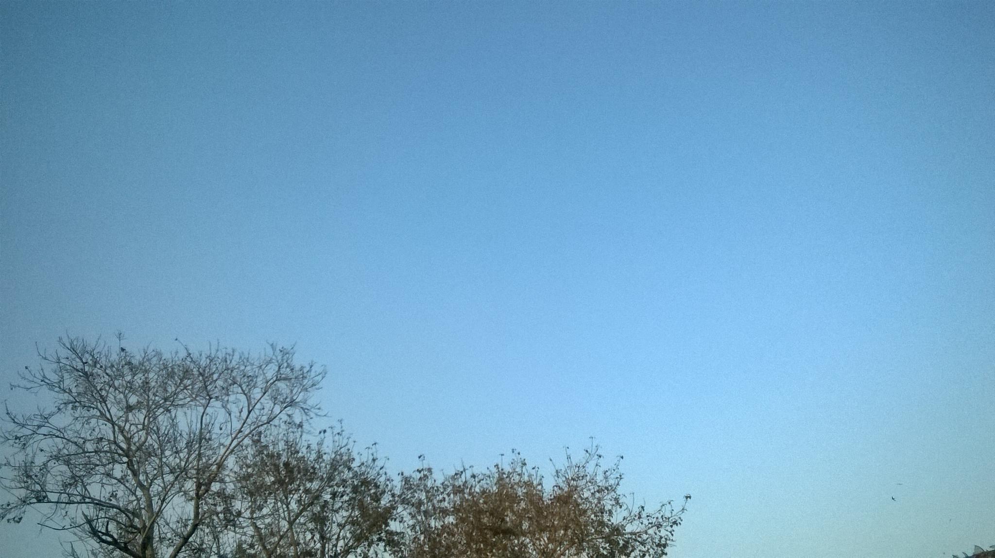 trees in blue sky by MJ