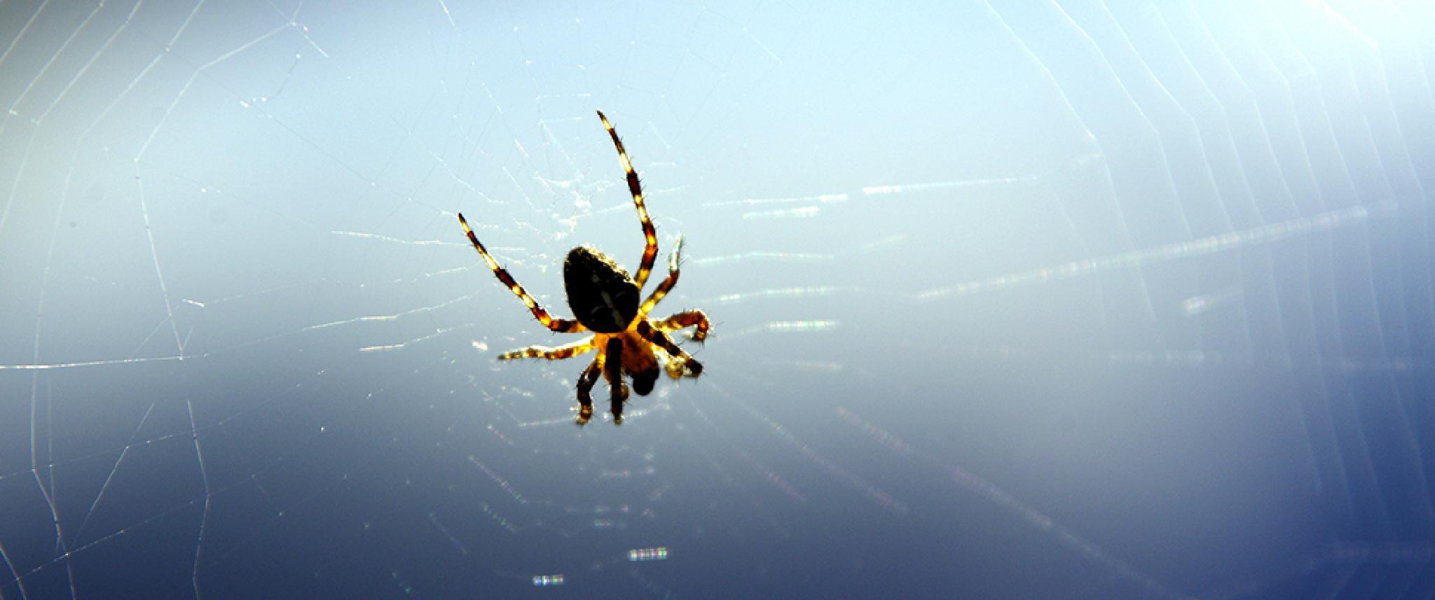 Spiderman by zuru