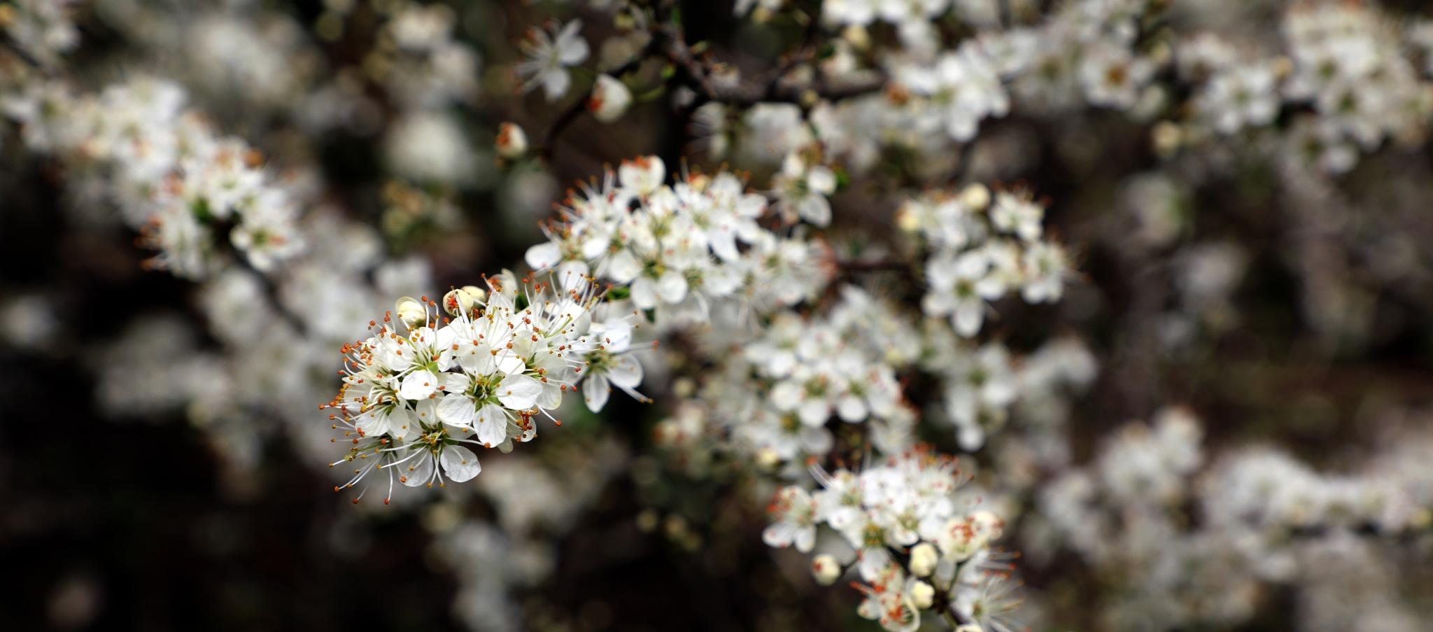 Flowers by zuru