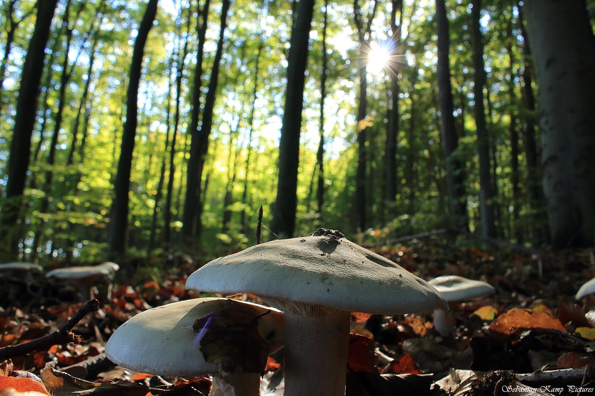 autumn Impressions by Sebastian Kamp