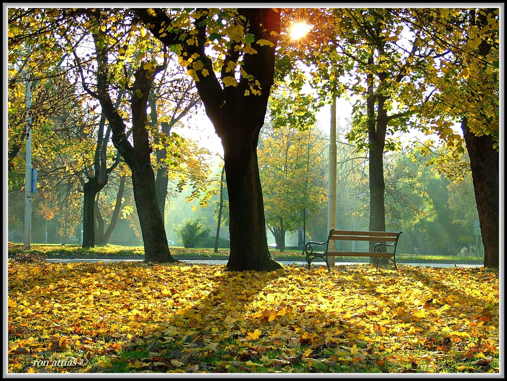 Garden Prague by ron.attias.7