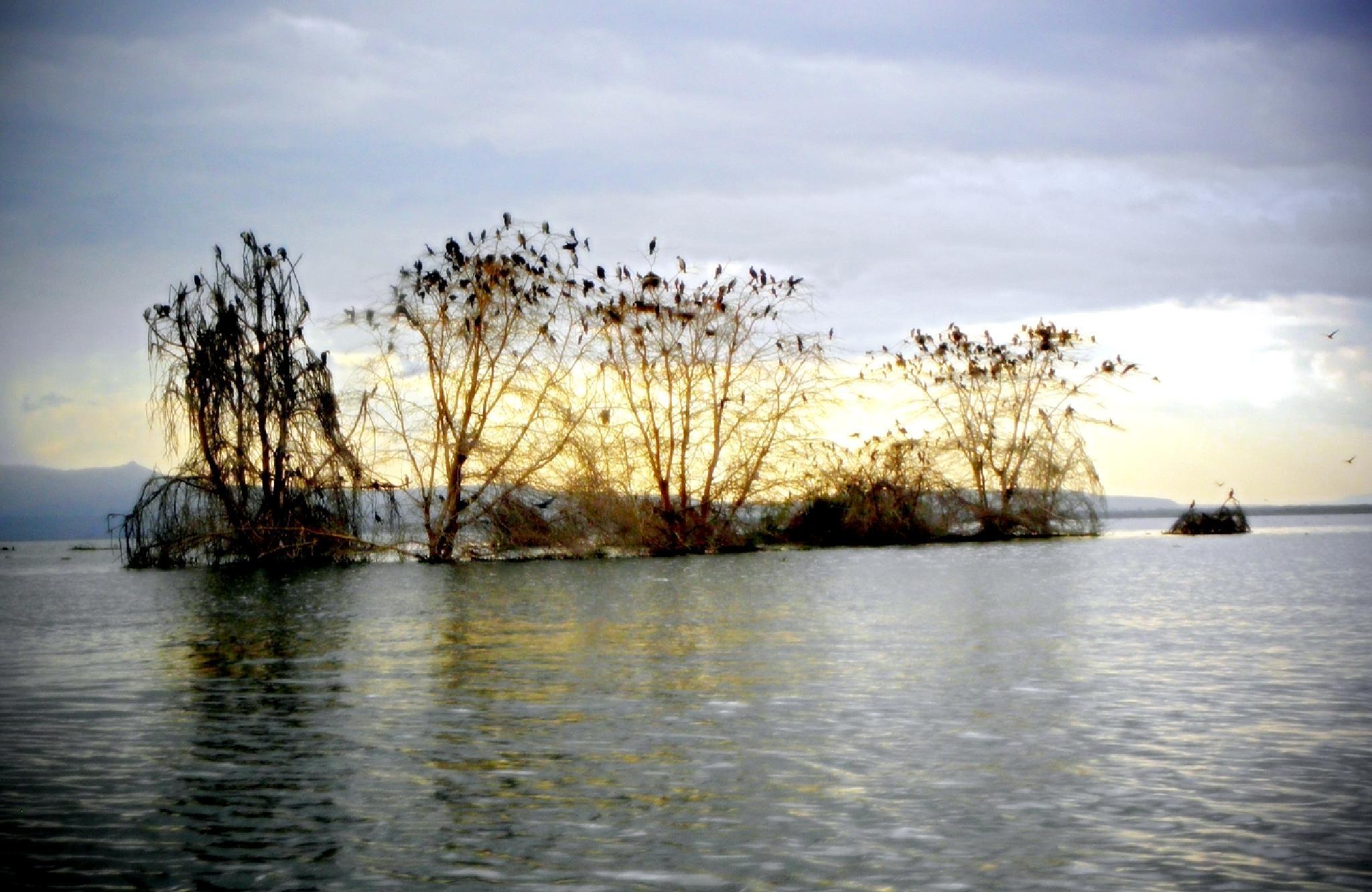 Lake Nivasha by dany.kahanovitch