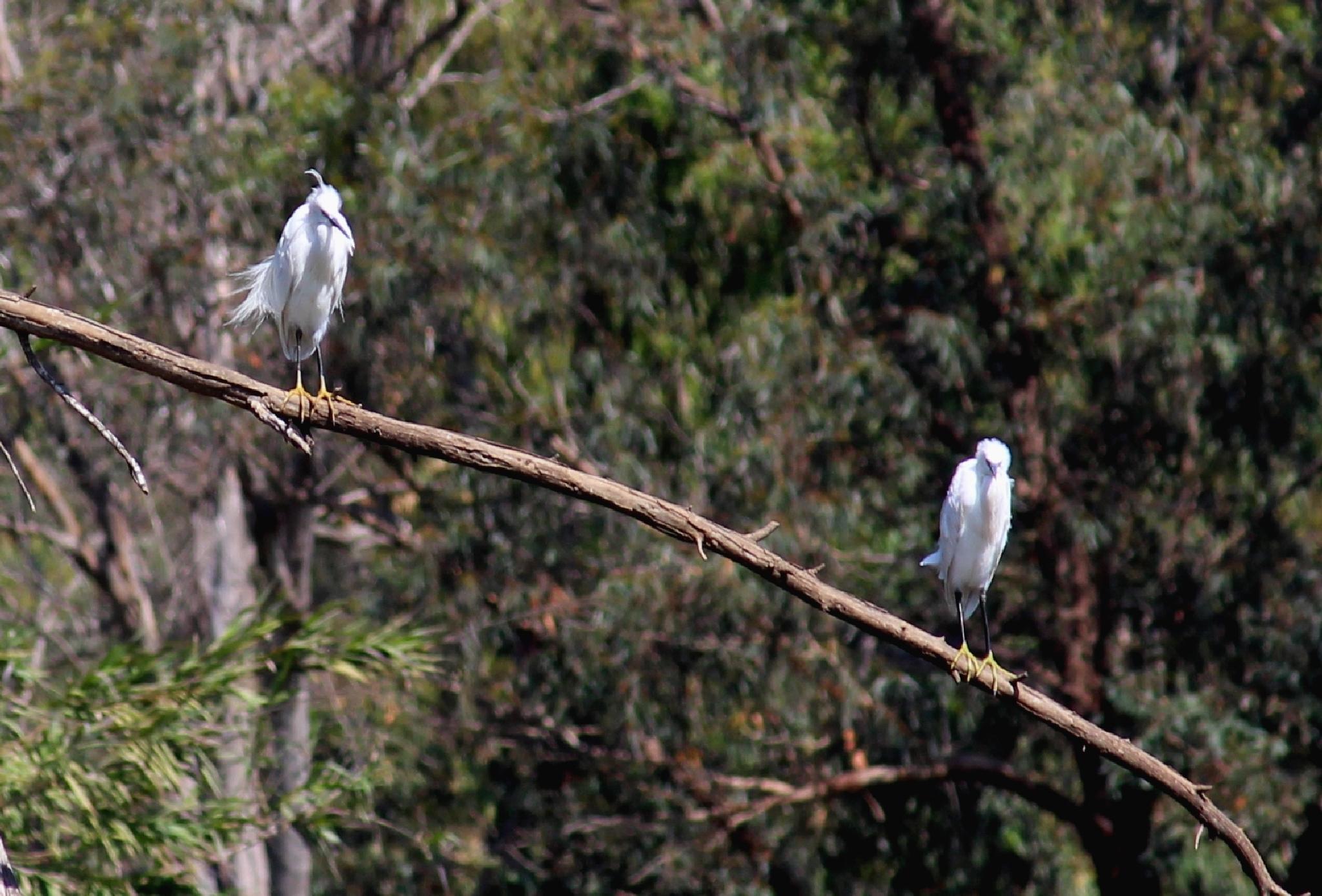 Birds by dany.kahanovitch