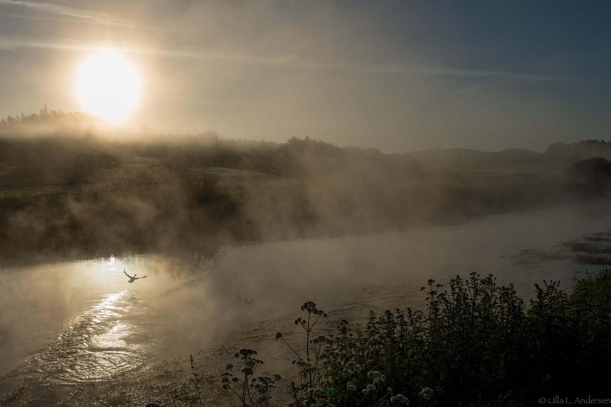 The river Gudenå by Ulla Lippert Andersen