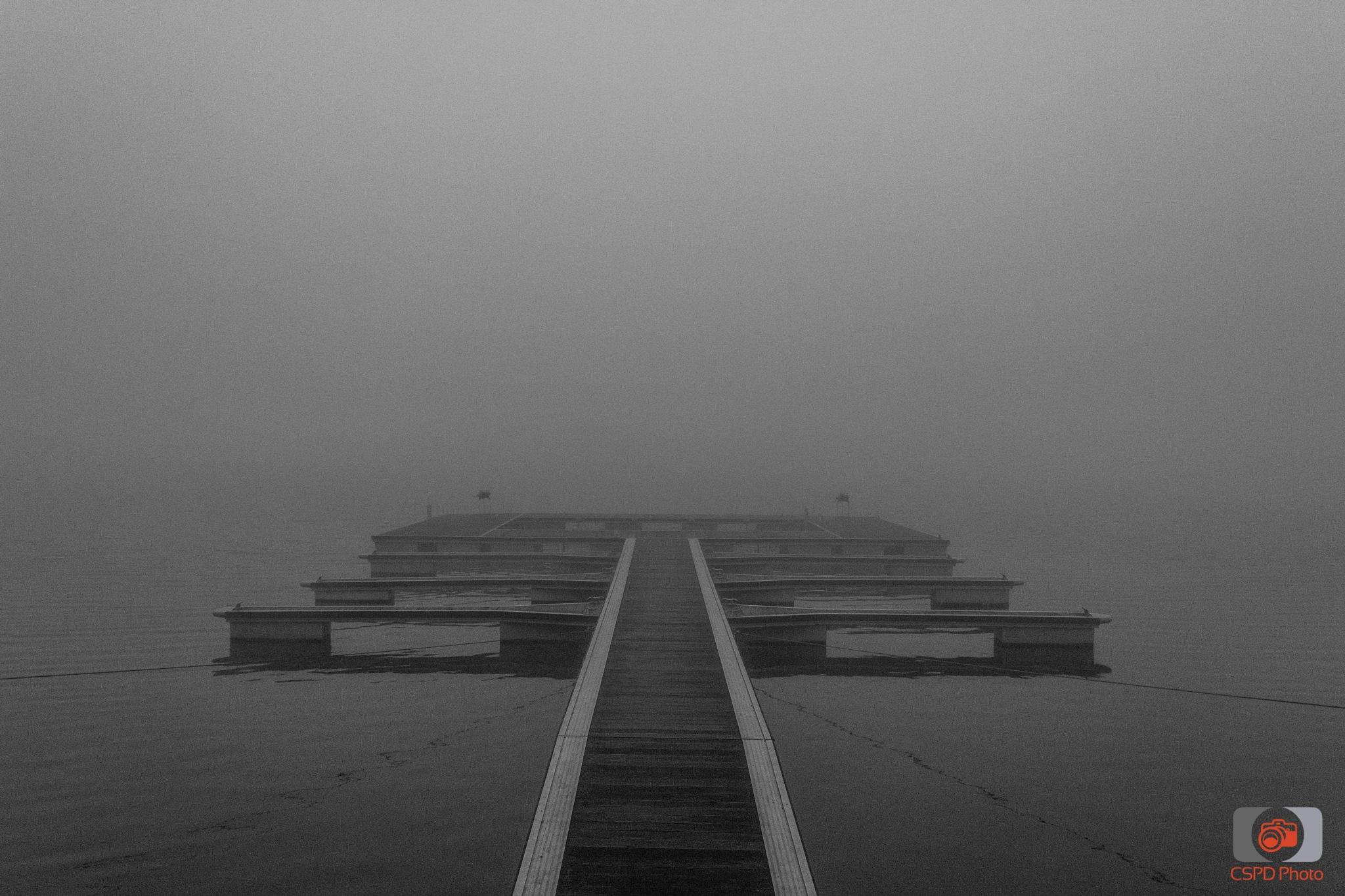 Fog by Carla Dias