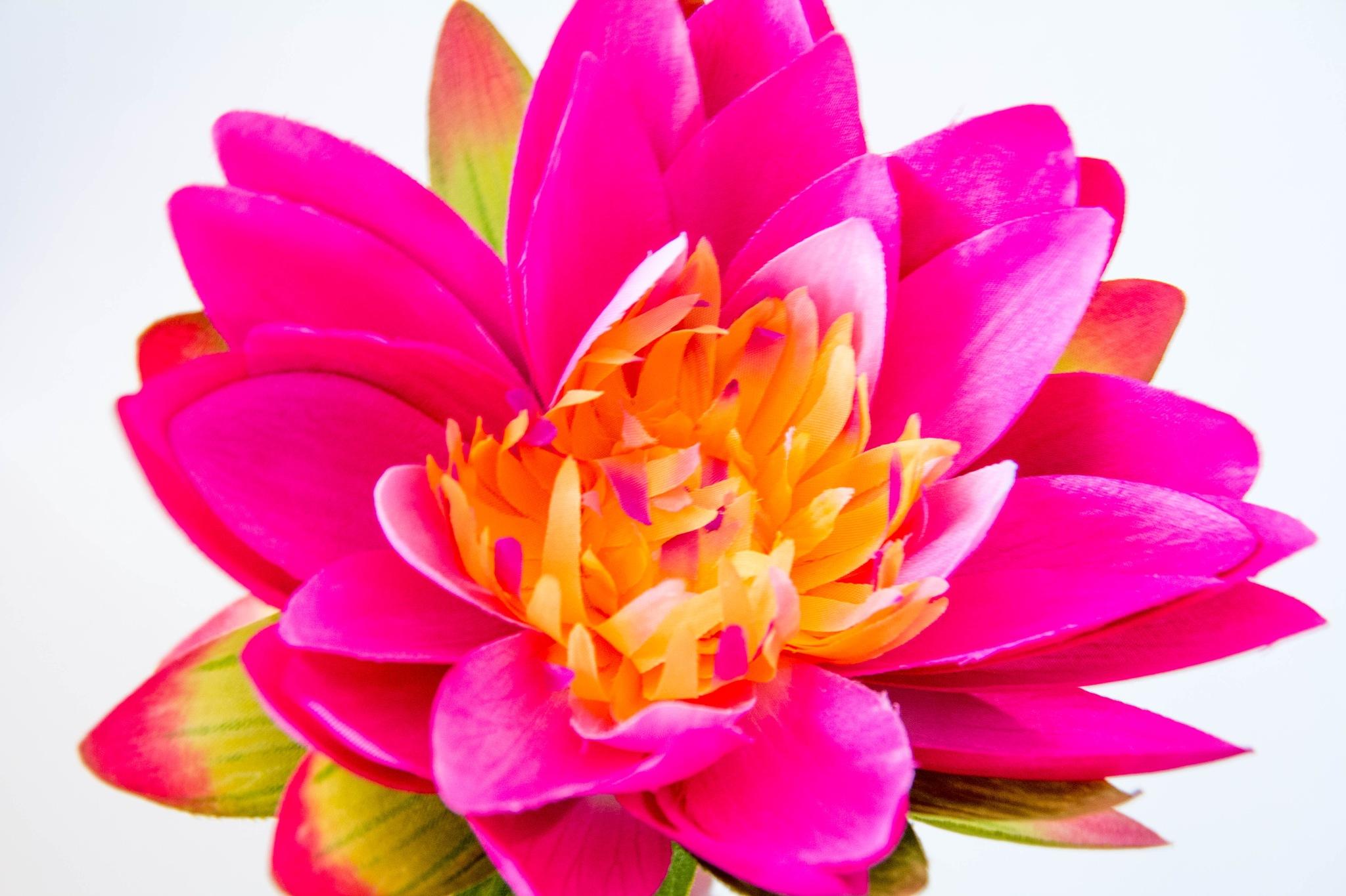 Uma flor côr-de-rosa by Carla Dias