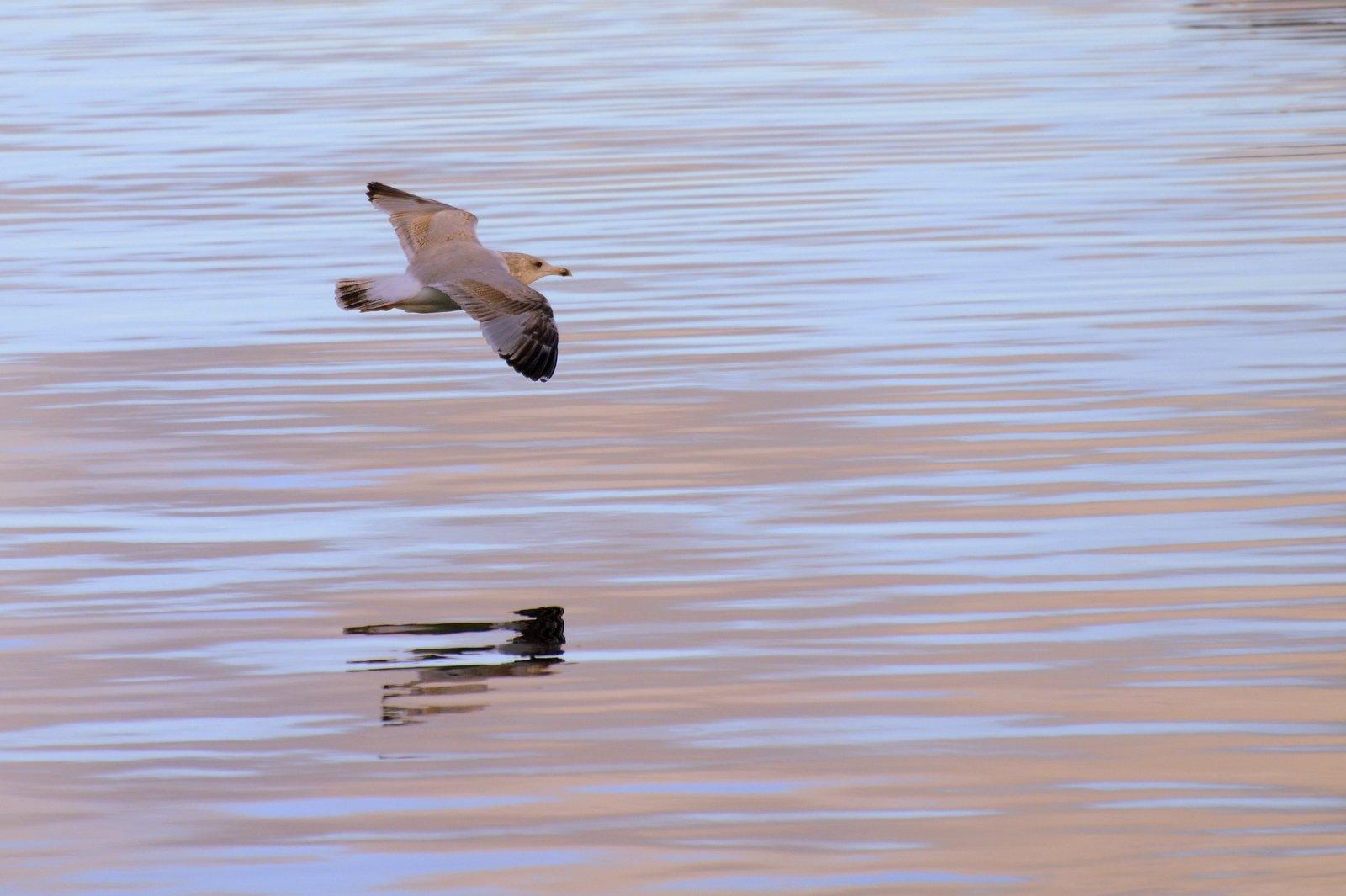 Photo in Nature #bird #gull #sea #nature #nikon