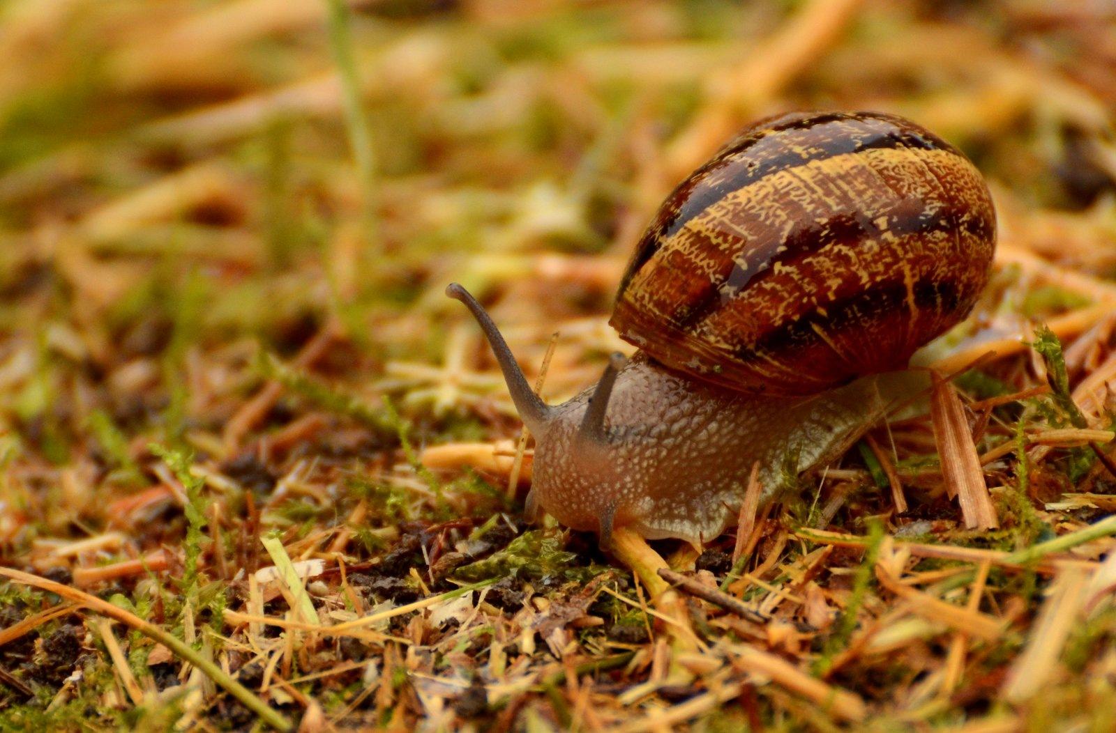 Escargot by jeffdixon