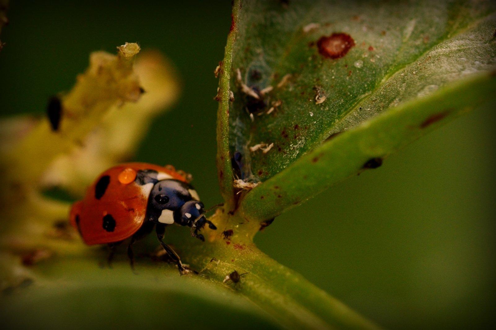 Ladybird. by jeffdixon