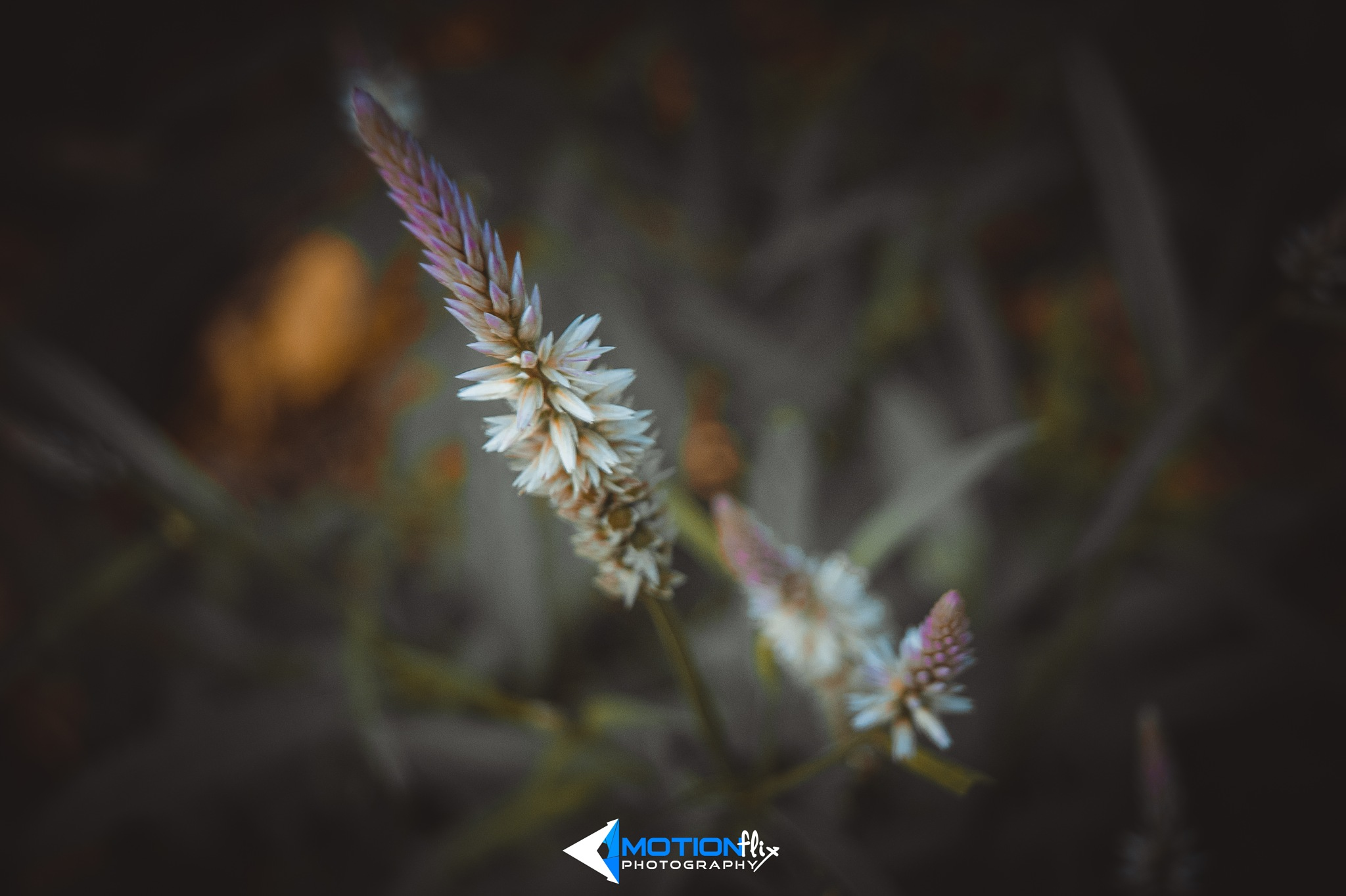 Beauty of Nature by Motionflix photography