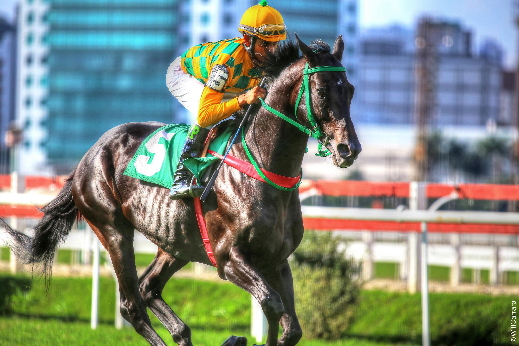 Jockey Club de São Paulo - HDRI - Brasil by Will Carrara Photographer