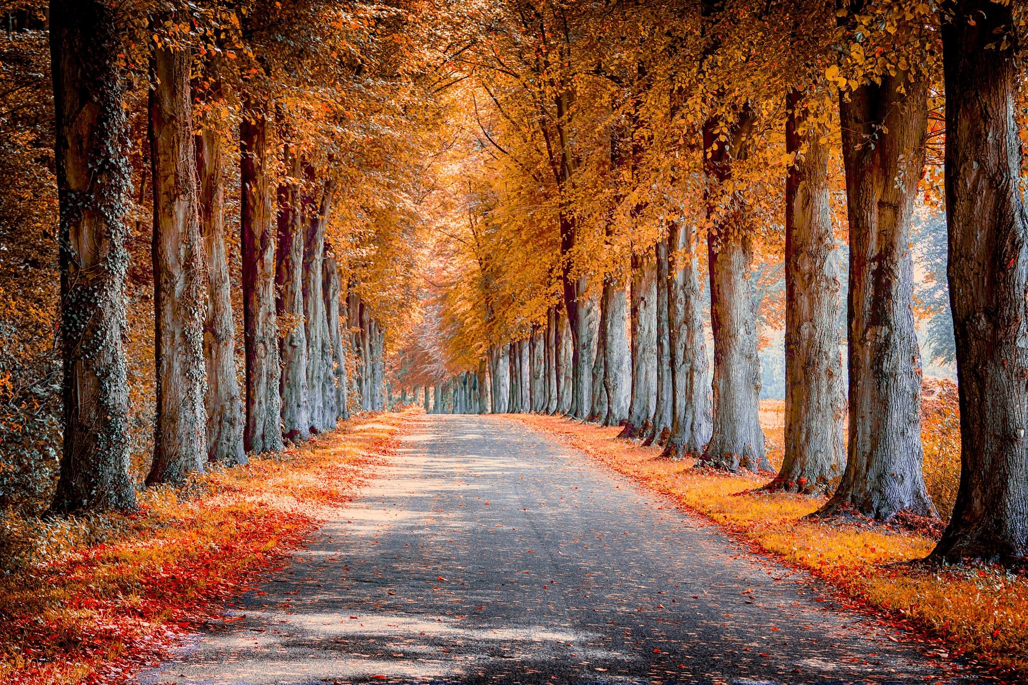 Autumn by micha.boeckling
