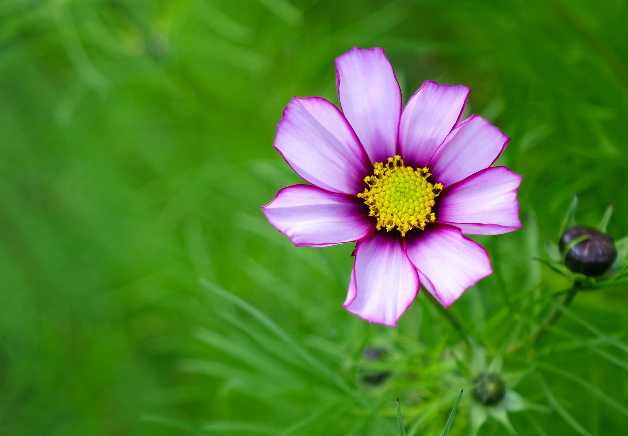 Flower by Peter Edwardo Vicente.