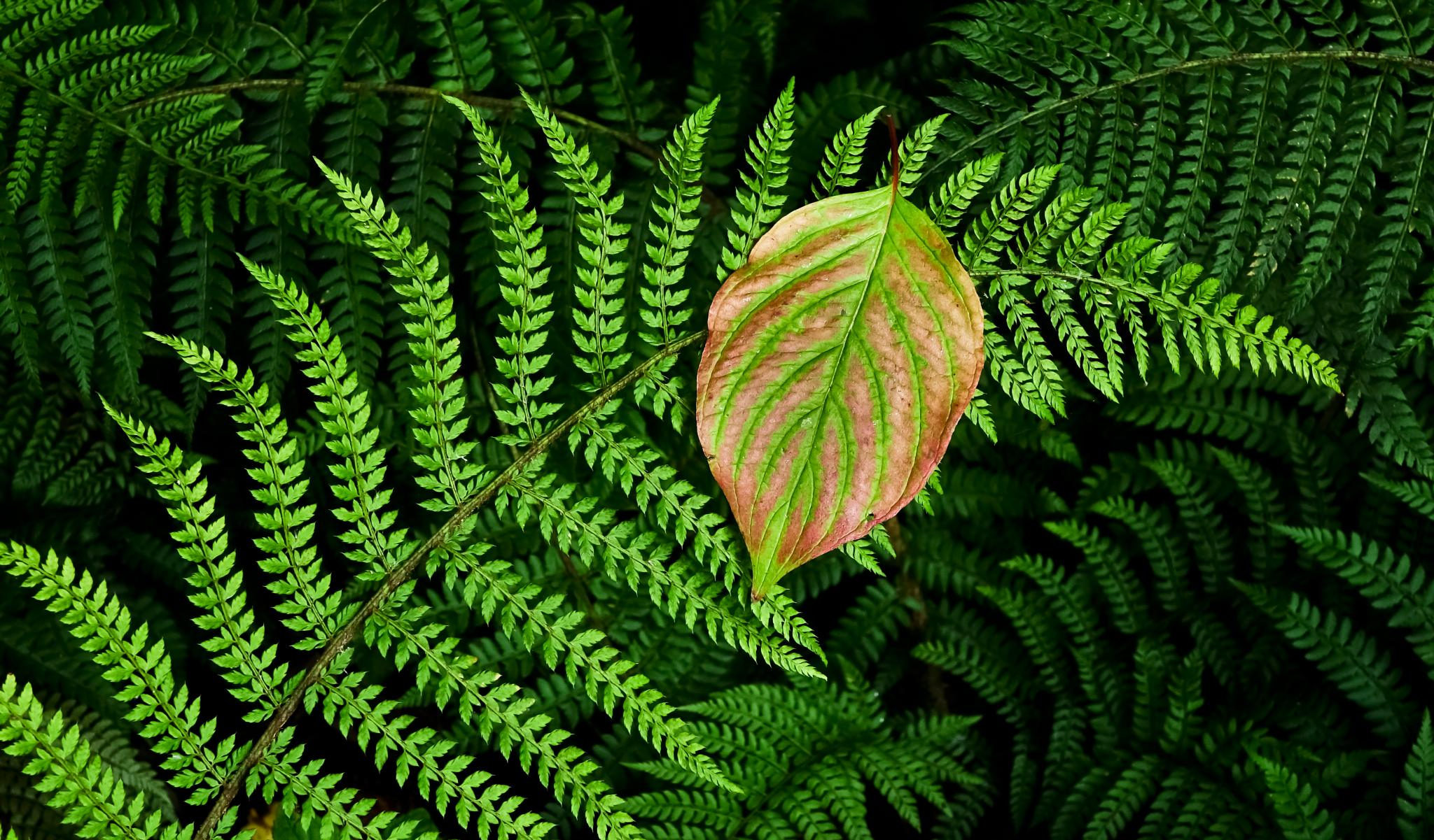 Fern/leaf by Peter Edwardo Vicente.