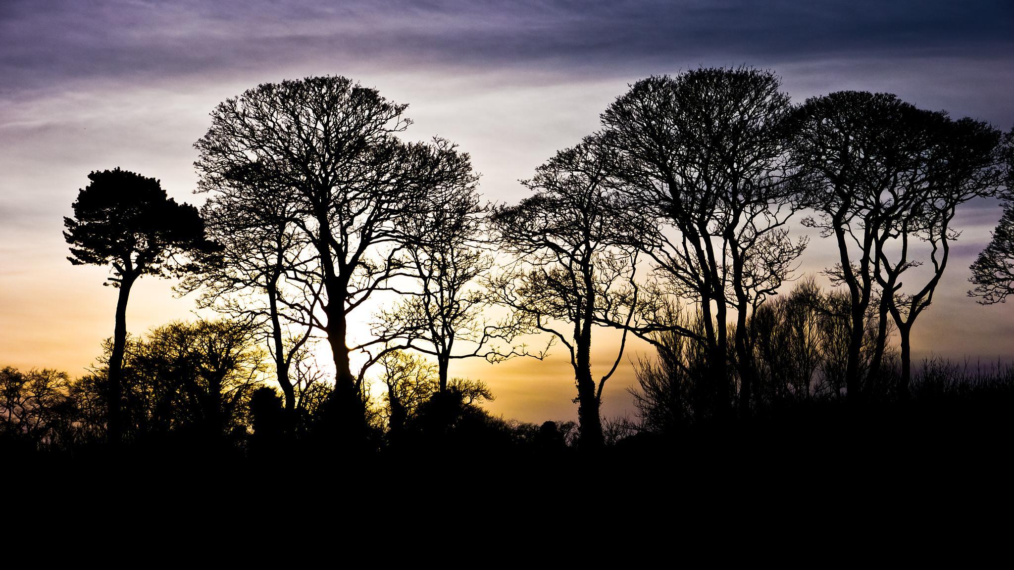 November sky by Peter Edwardo Vicente.