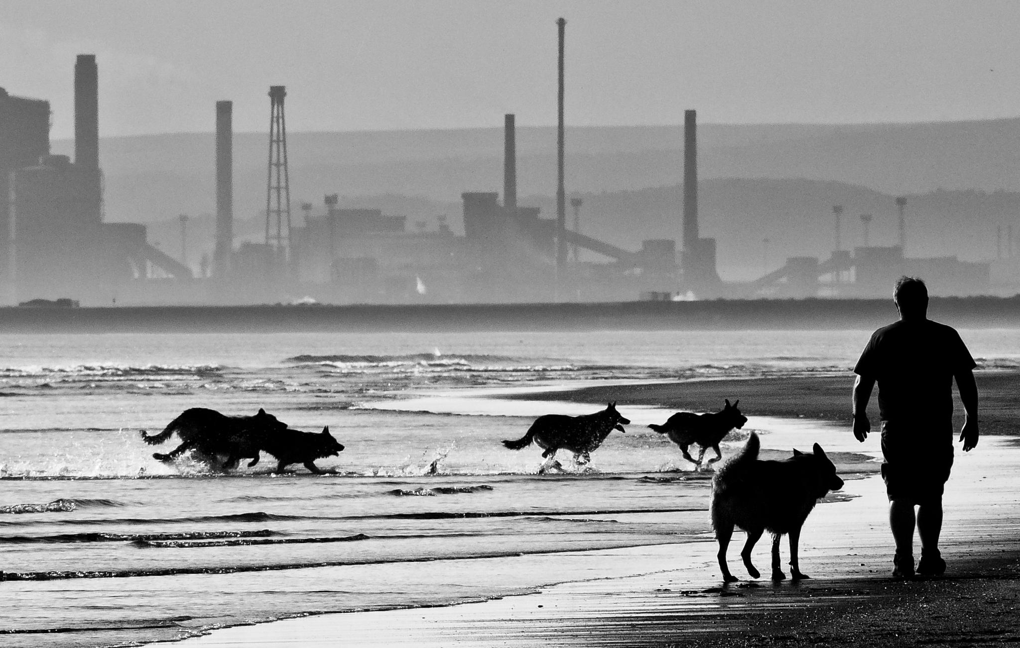 Walking the pack! by Peter Edwardo Vicente.
