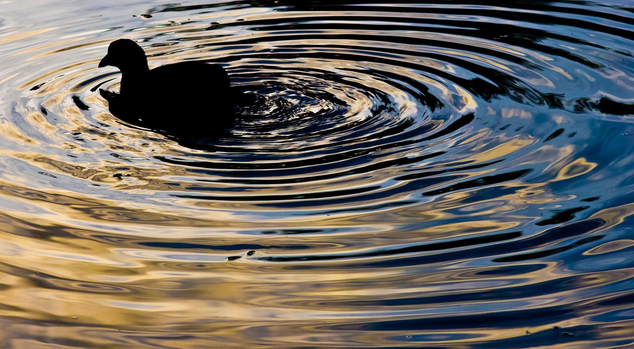 circles. by Peter Edwardo Vicente.
