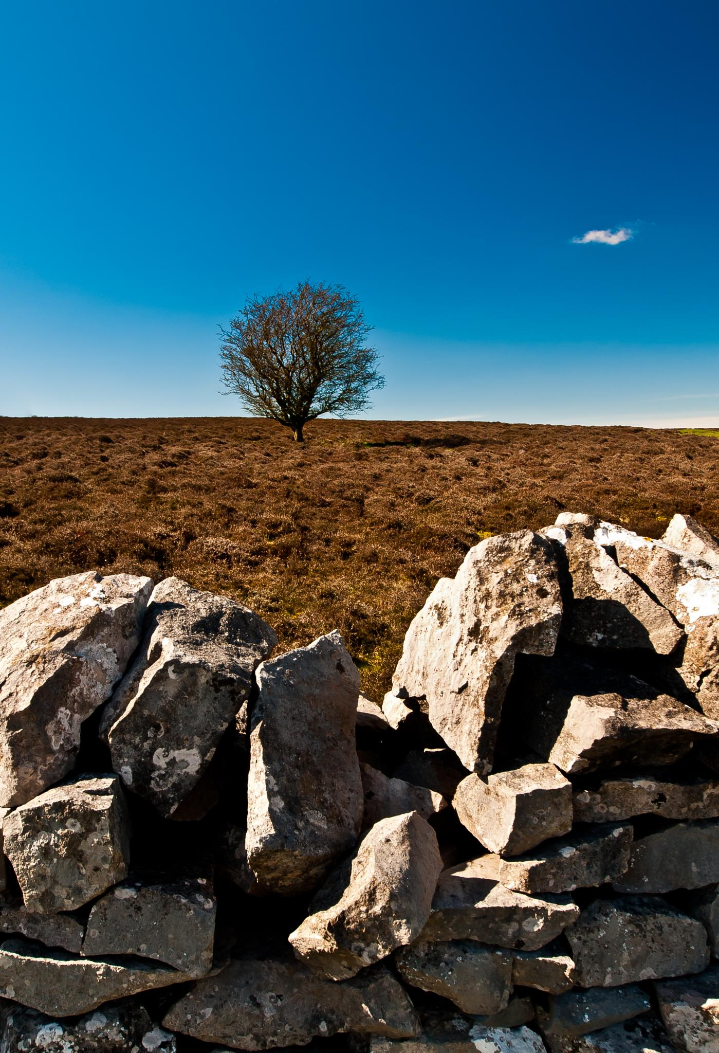 Dry stone wall by Peter Edwardo Vicente.