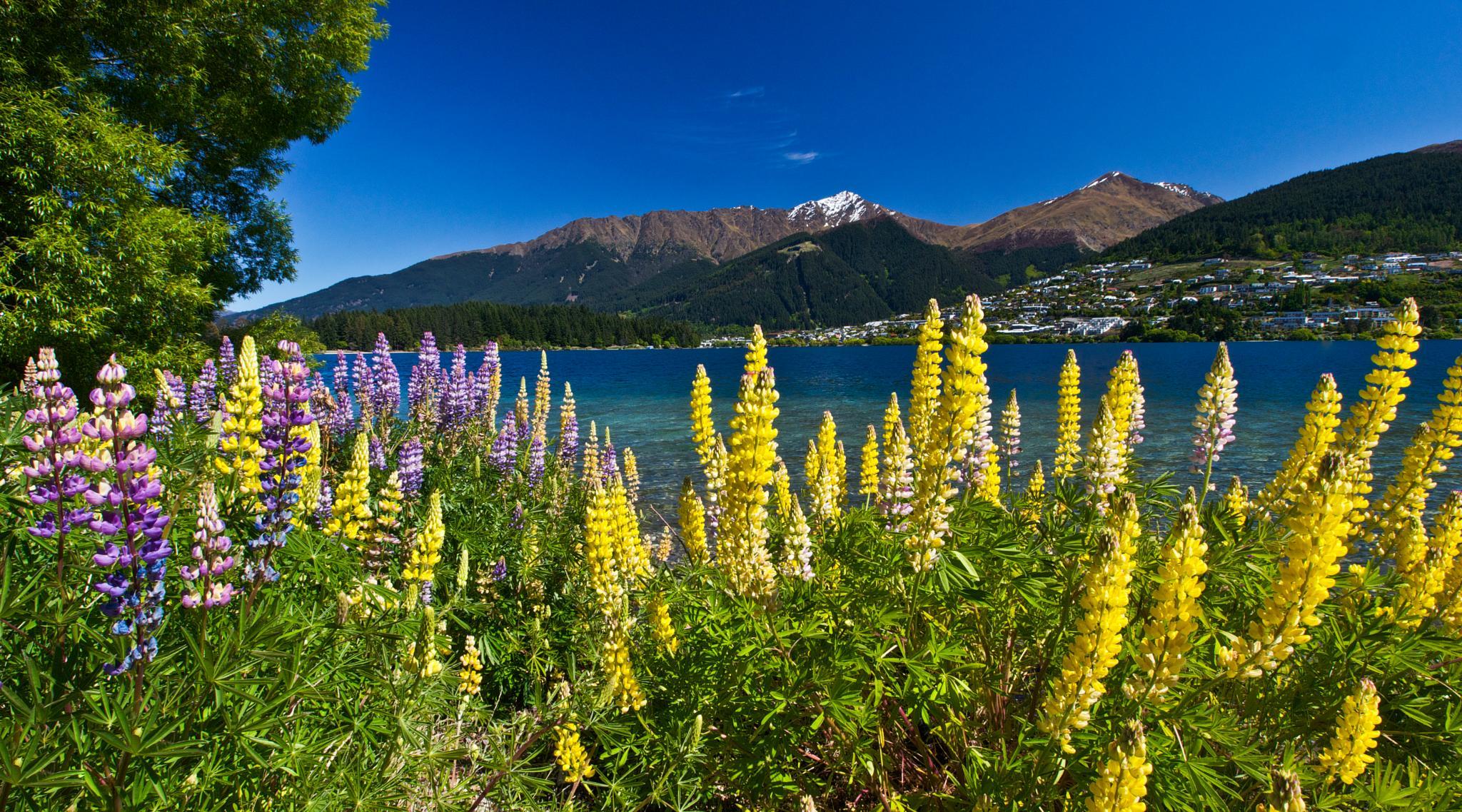 Queenstown NZ by Peter Edwardo Vicente.