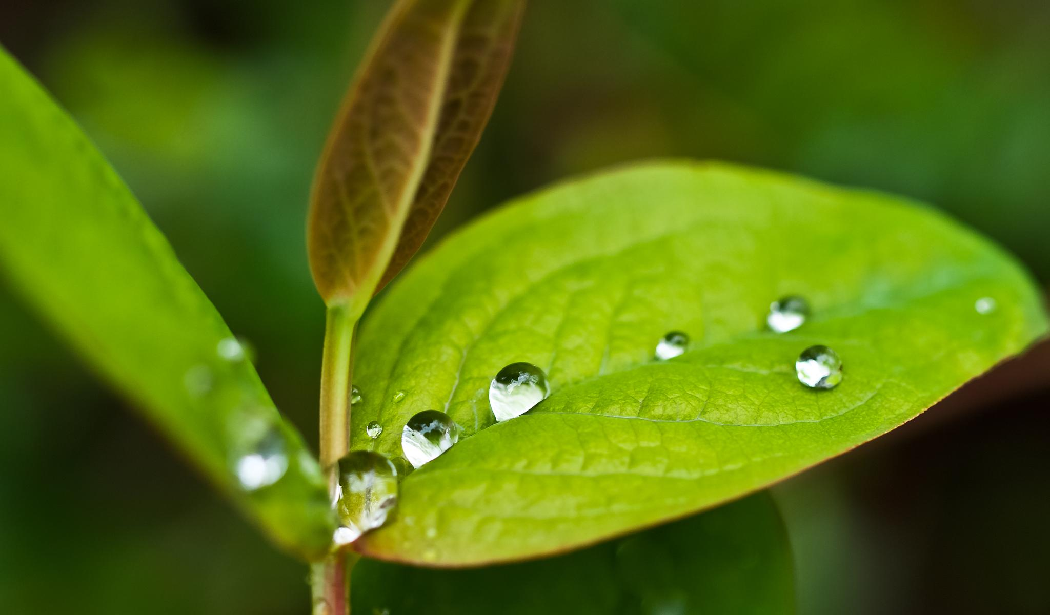 Droplets by Peter Edwardo Vicente.