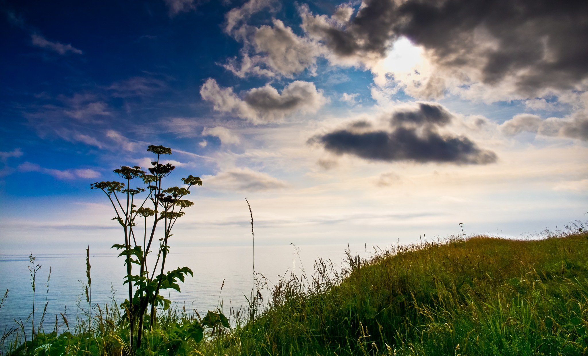 Cliff top Flora by Peter Edwardo Vicente.
