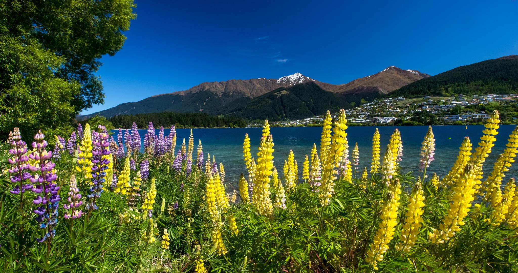 The lake by Peter Edwardo Vicente.