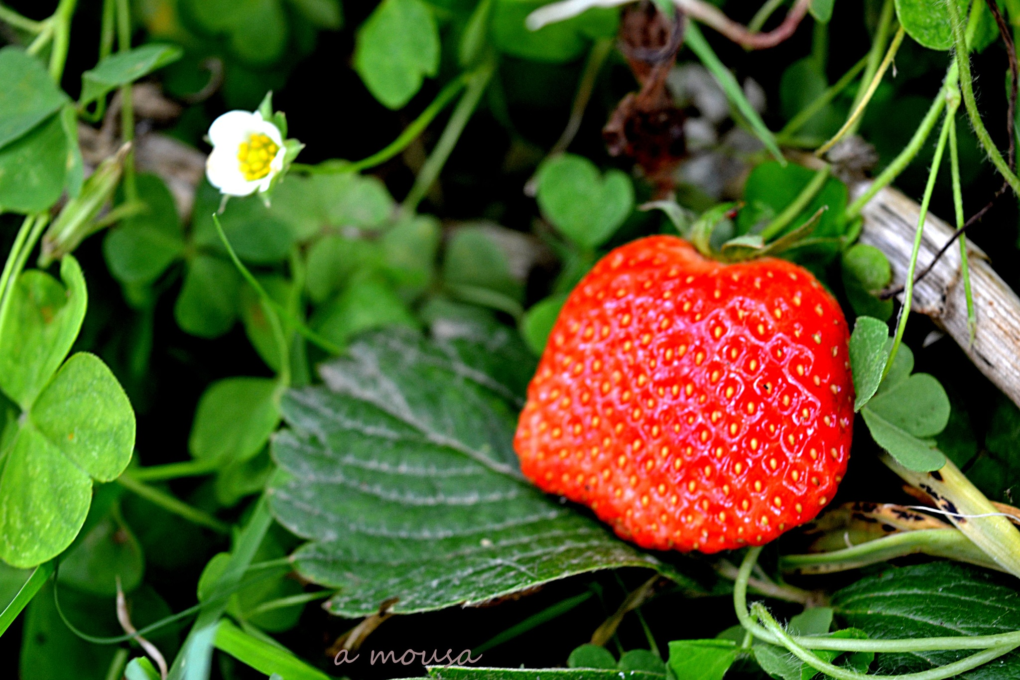 Photo in Random #strawberry #fruit
