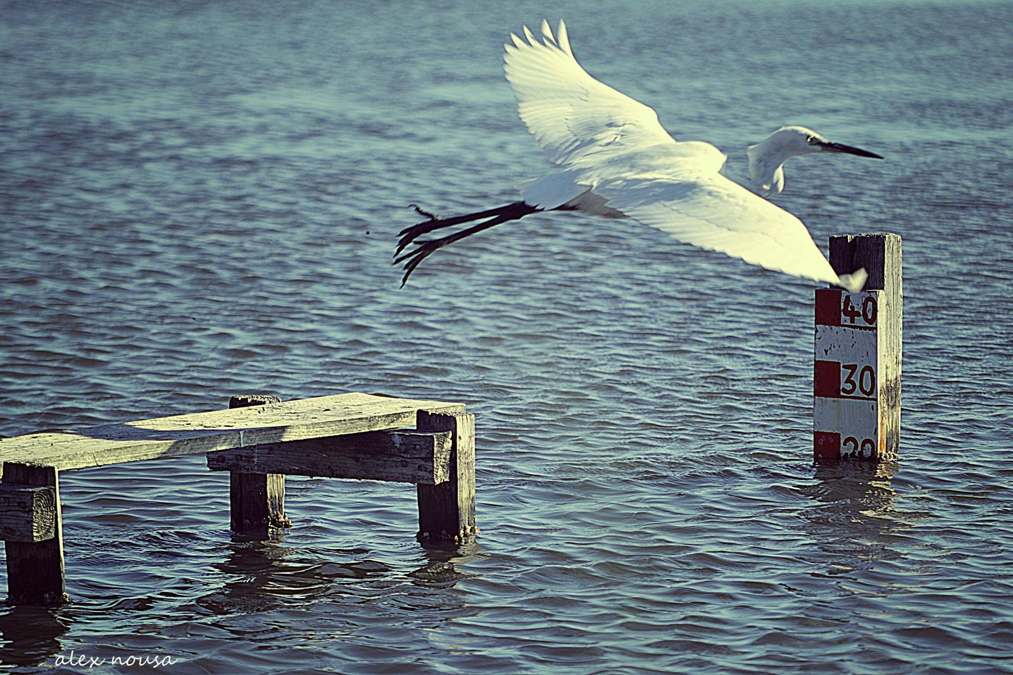 teke off moment! by alexandra.tsamimousa