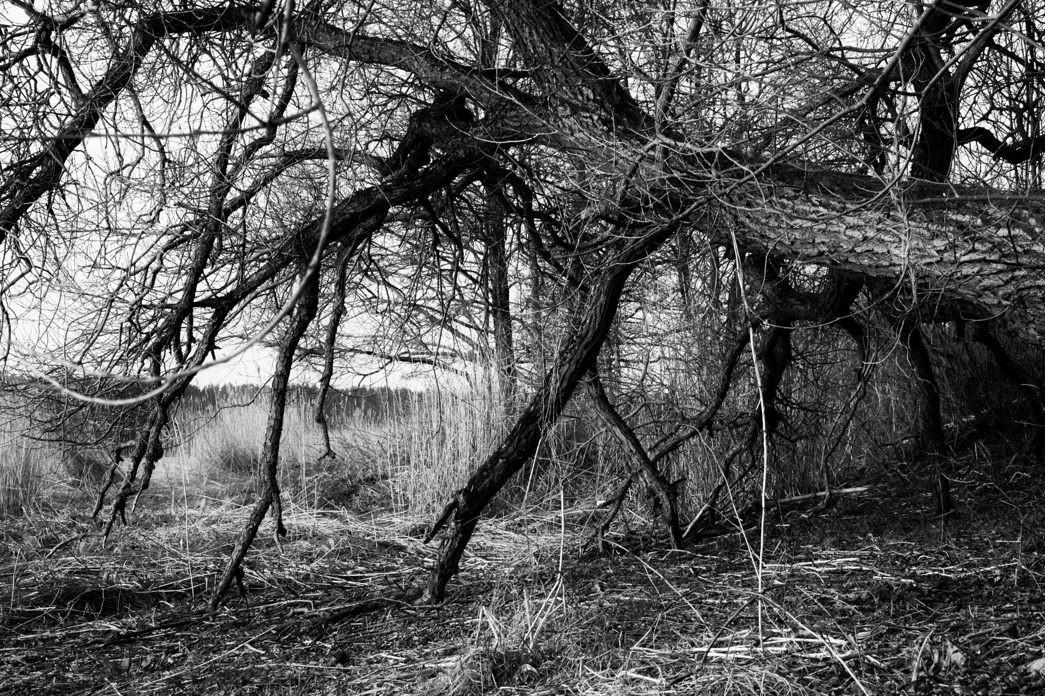 Dead tree by Art Wind