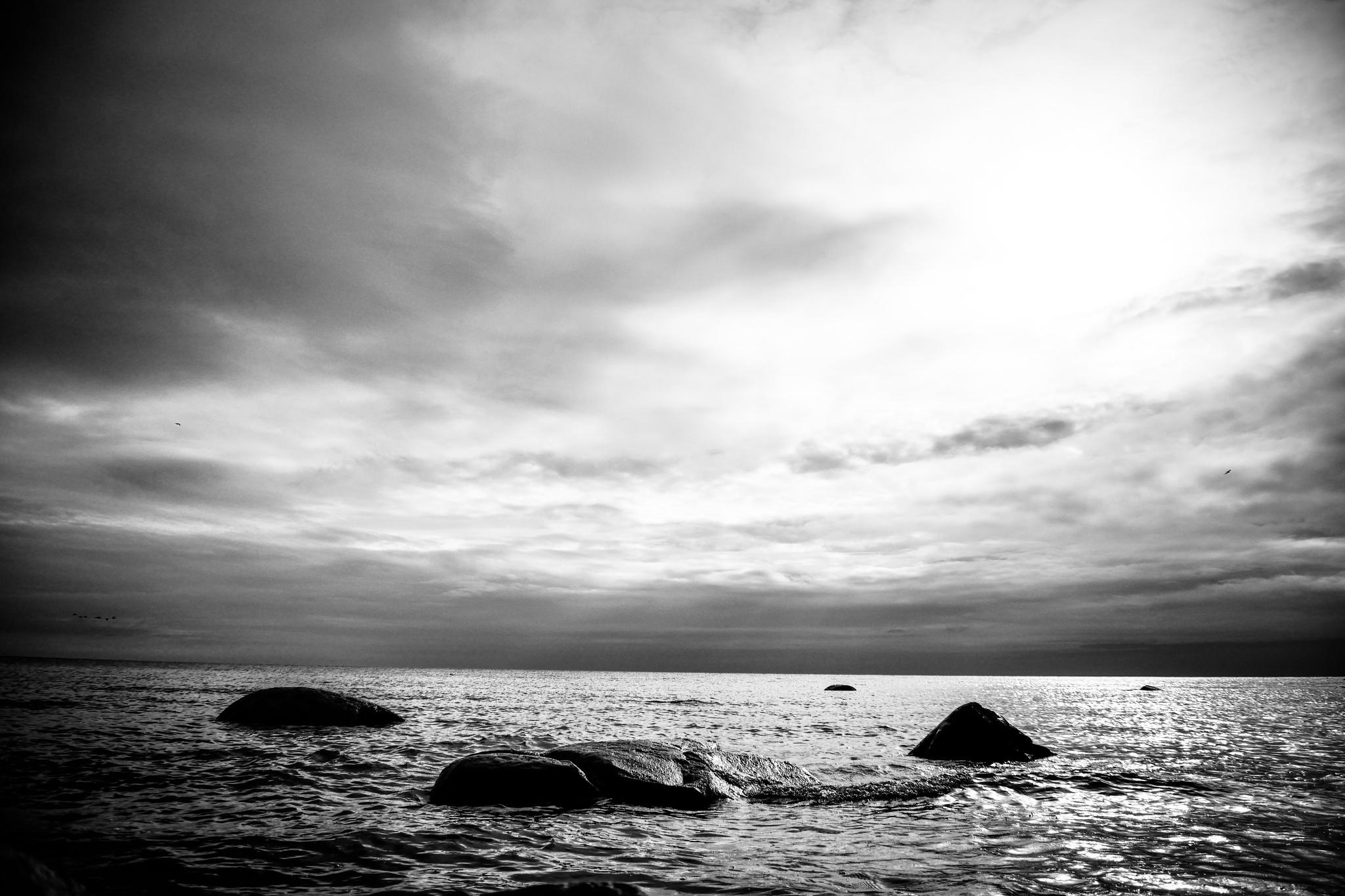 Sea. Stones. Birds. by Art Wind