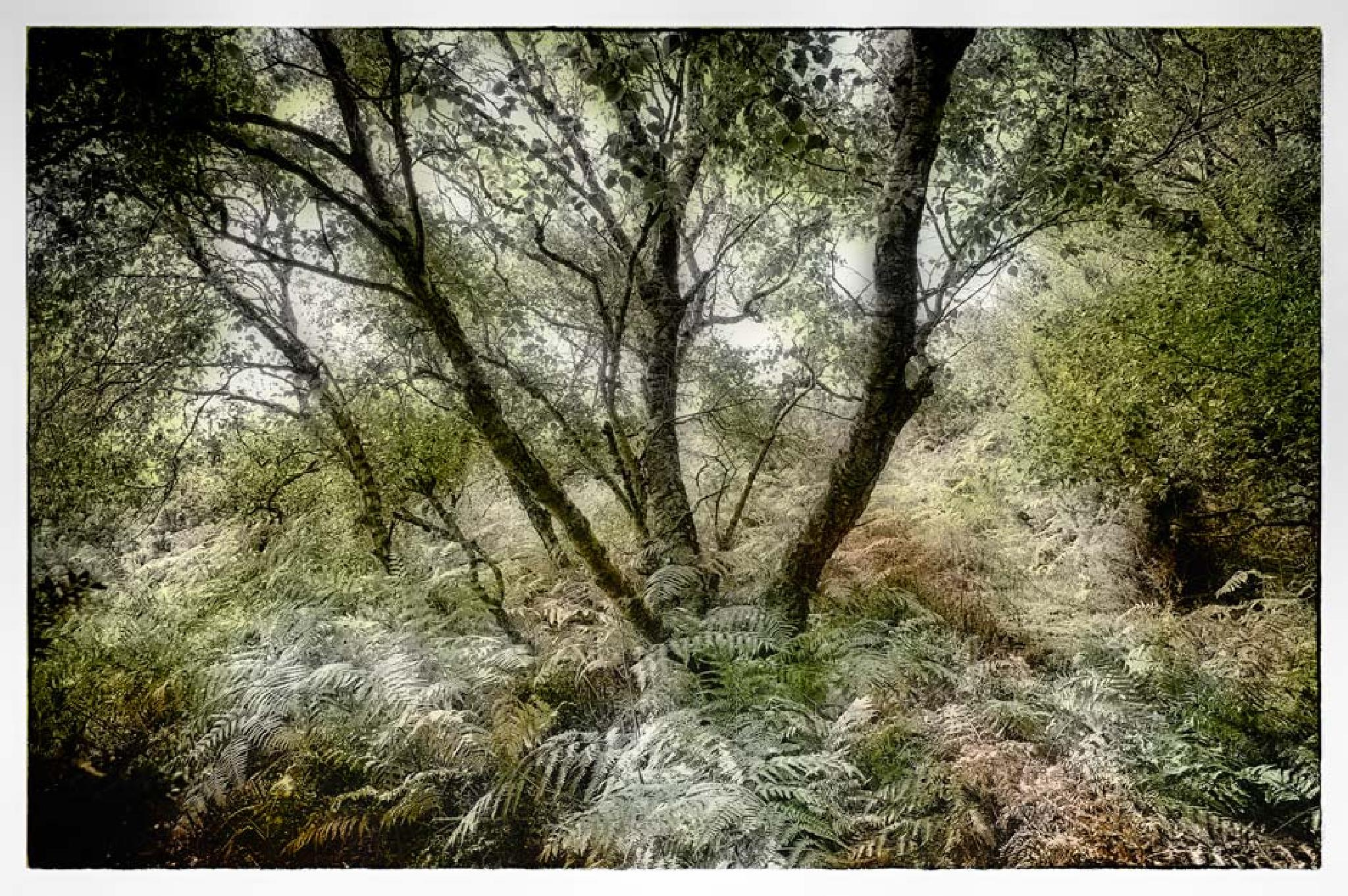 trees and ferns by Juliet Evans Photography