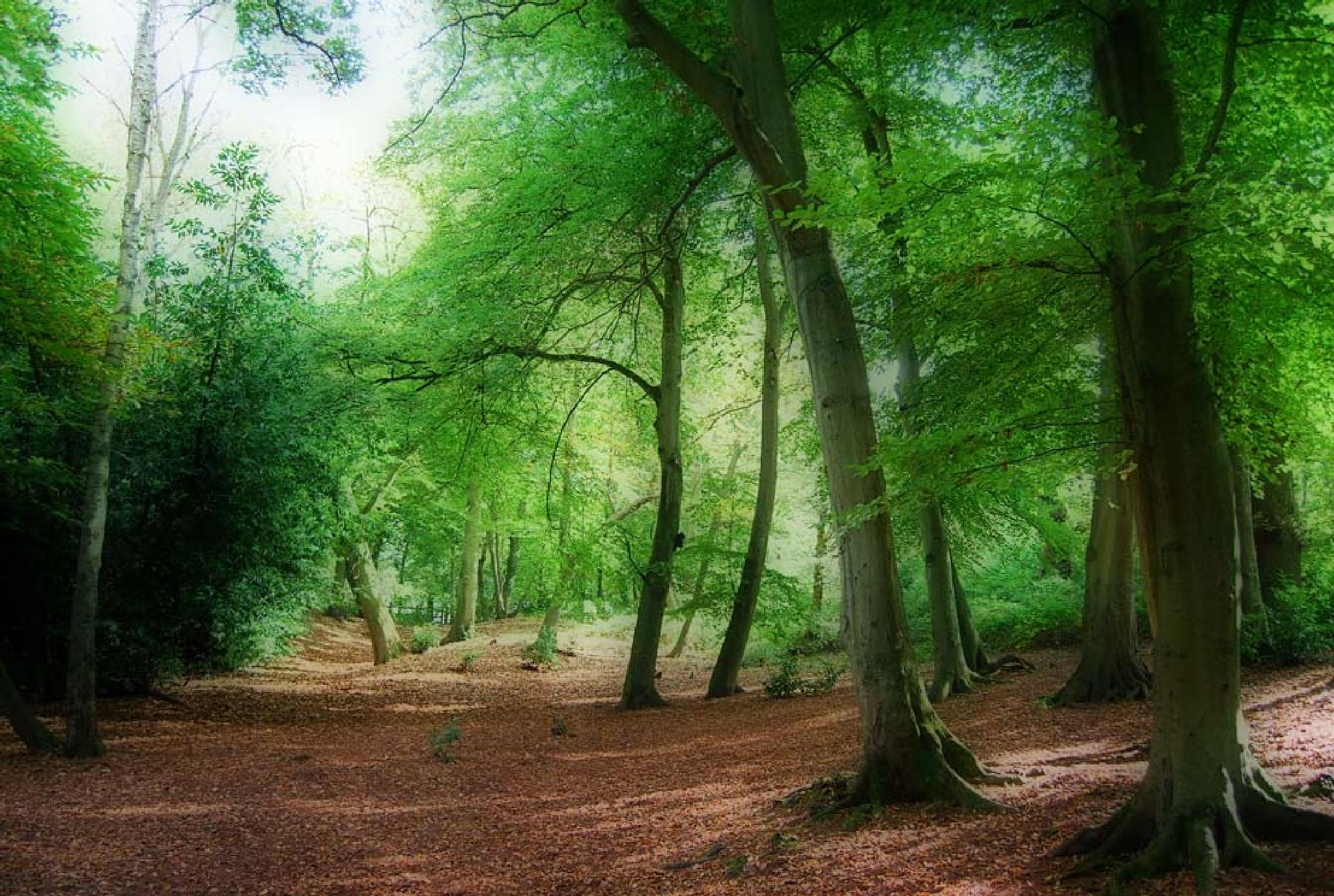 fantasy woodland by Juliet Evans Photography