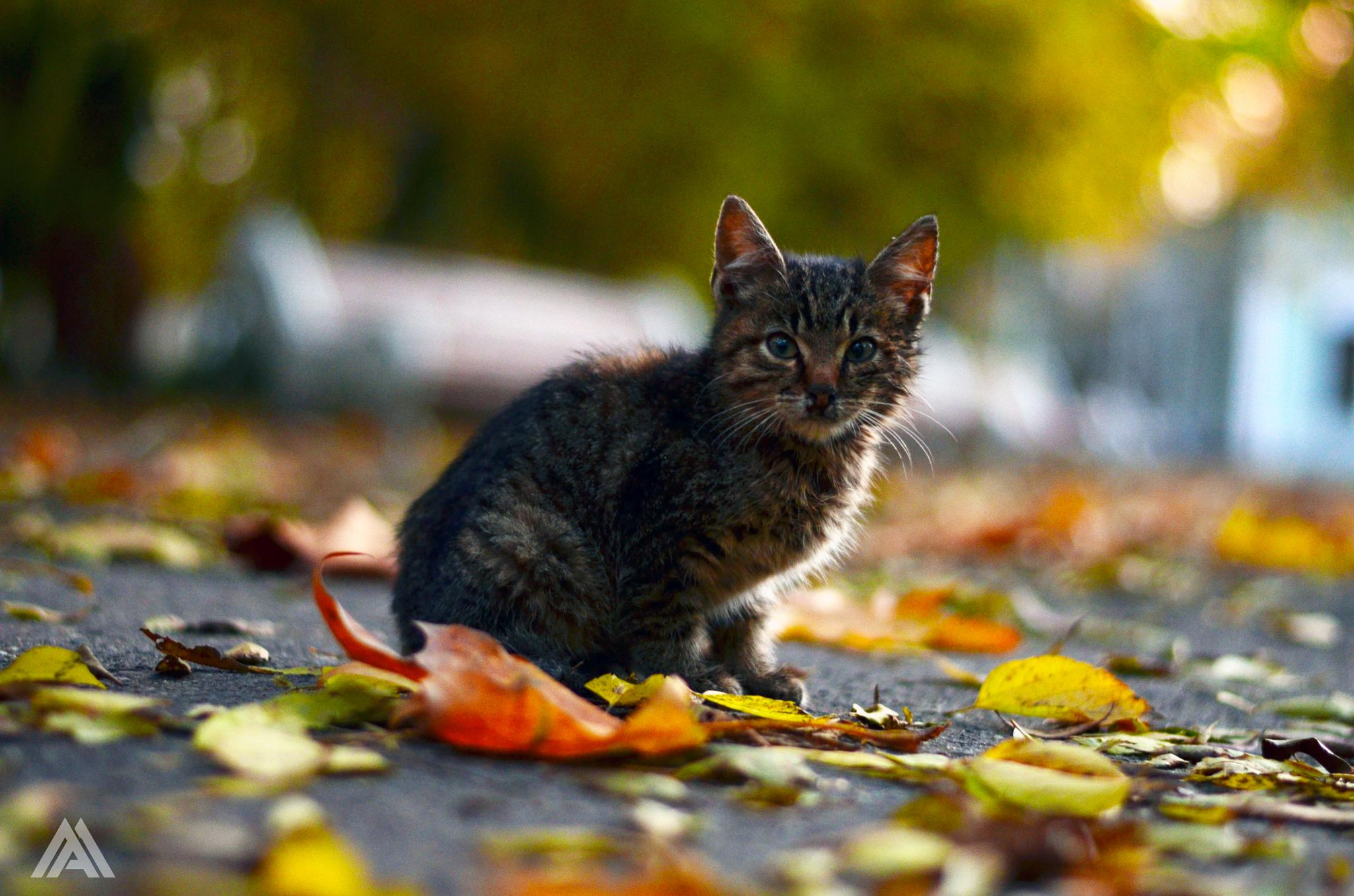 Lost My Kitty by Mihai Andrei