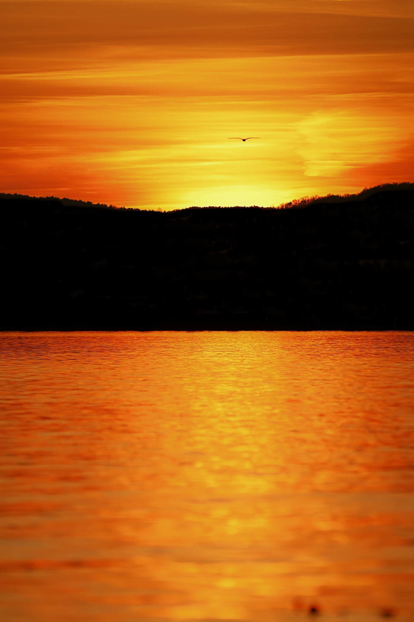 Photo in Landscape #animal #sunset #lake #water #gold #winter #bird