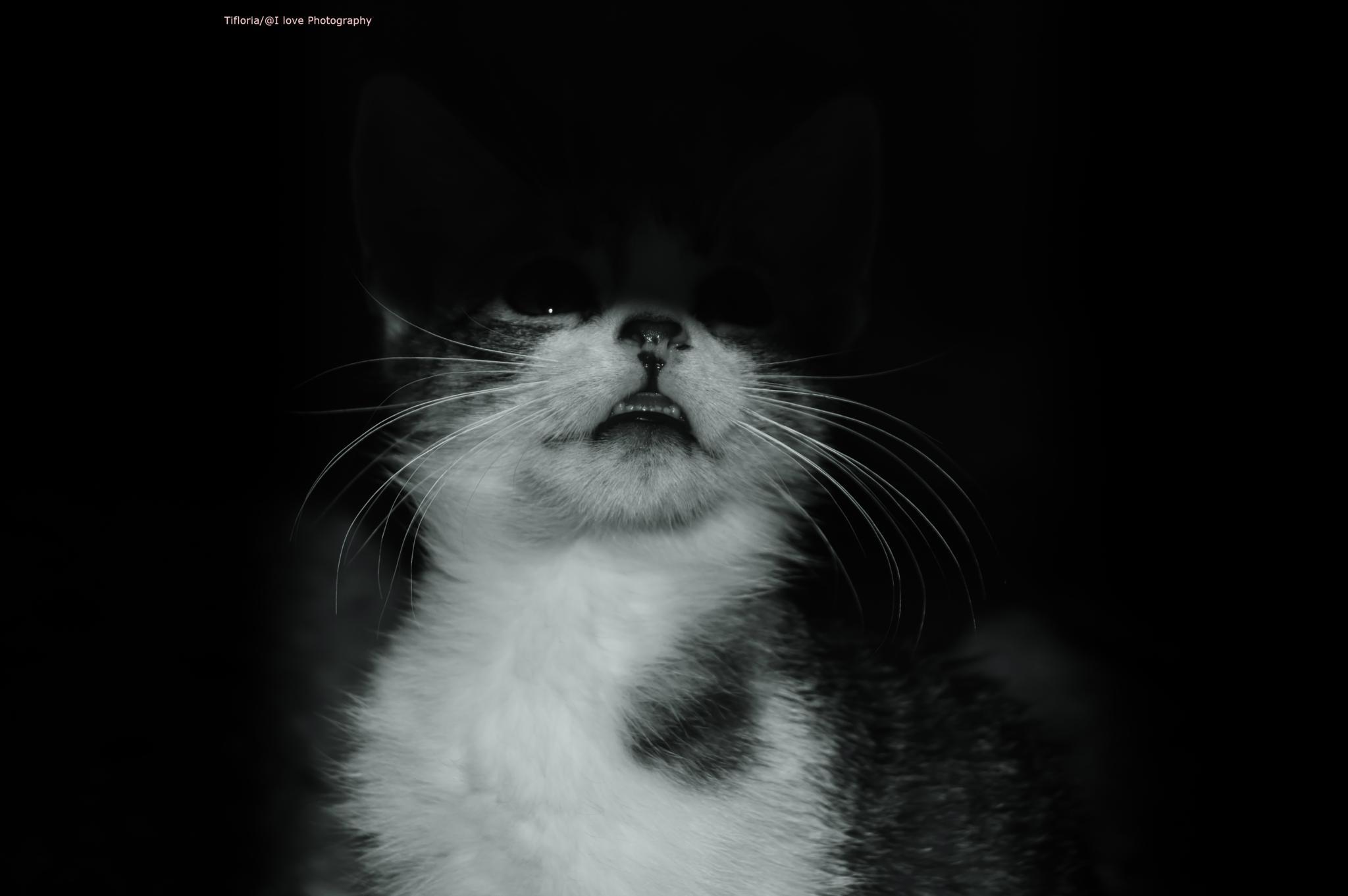 Kitty n the Darkness  by Ghizlane.Belkhanfer